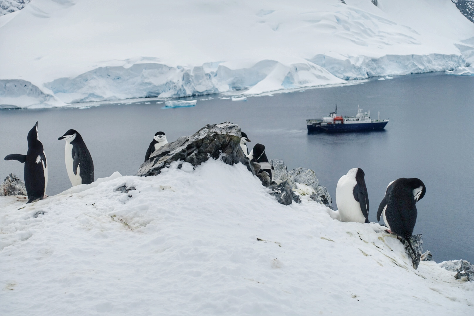 Things to do in Antarctica