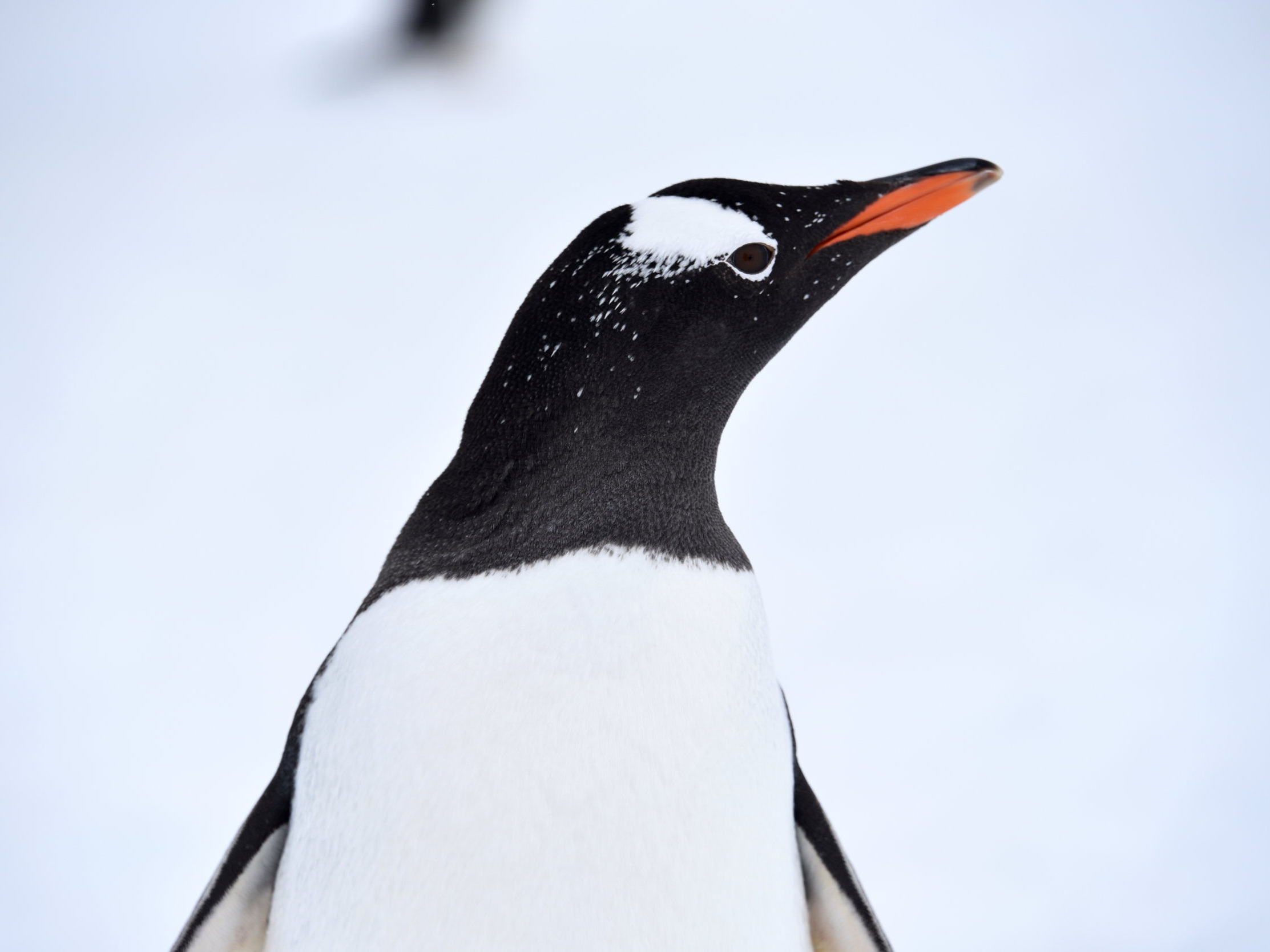antarctica vacation