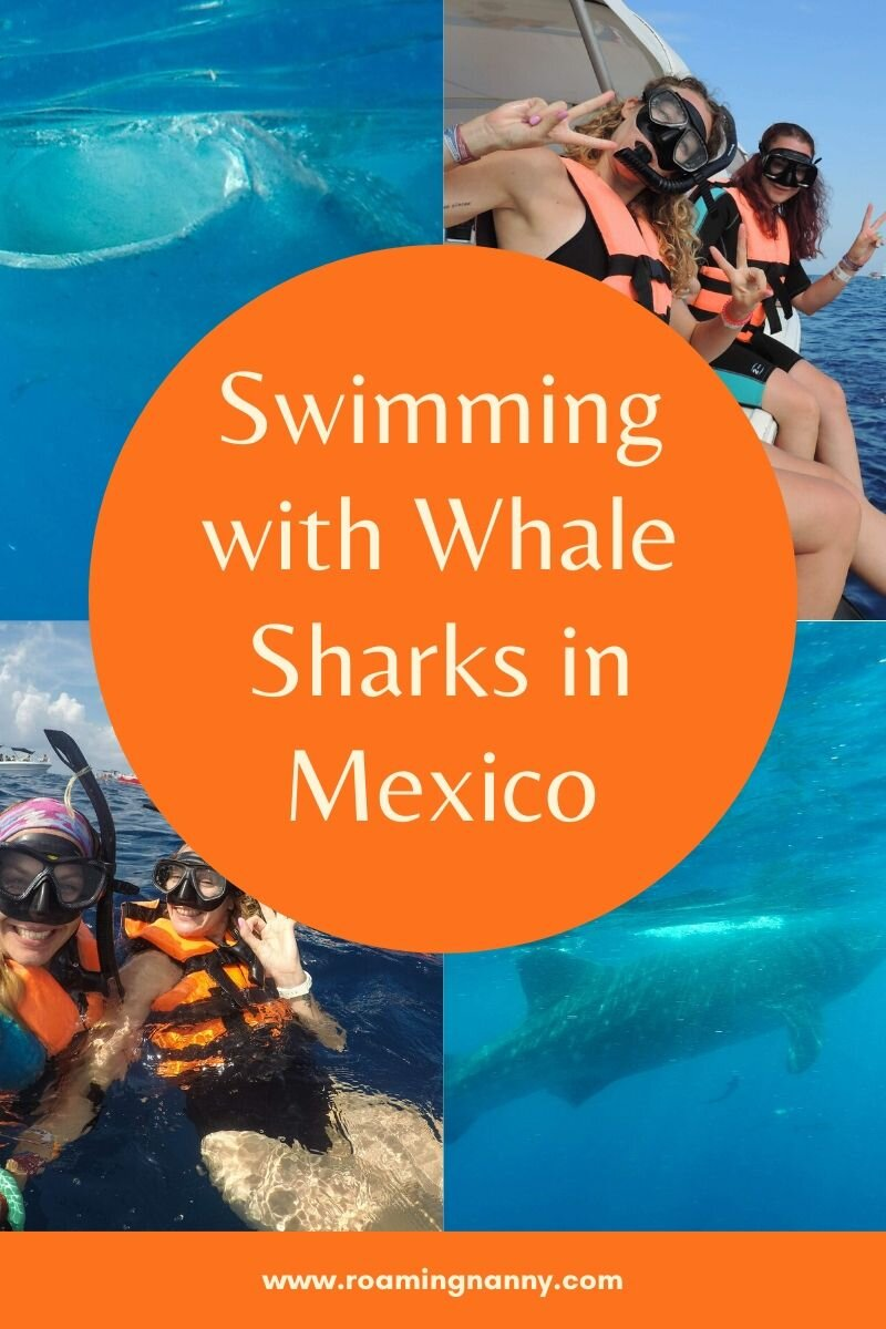 Is swimming with Whale Sharks in Mexico on your bucket list? Here is everything you need to know to make that dream happen! #whalesharks #bucketlist #mexico