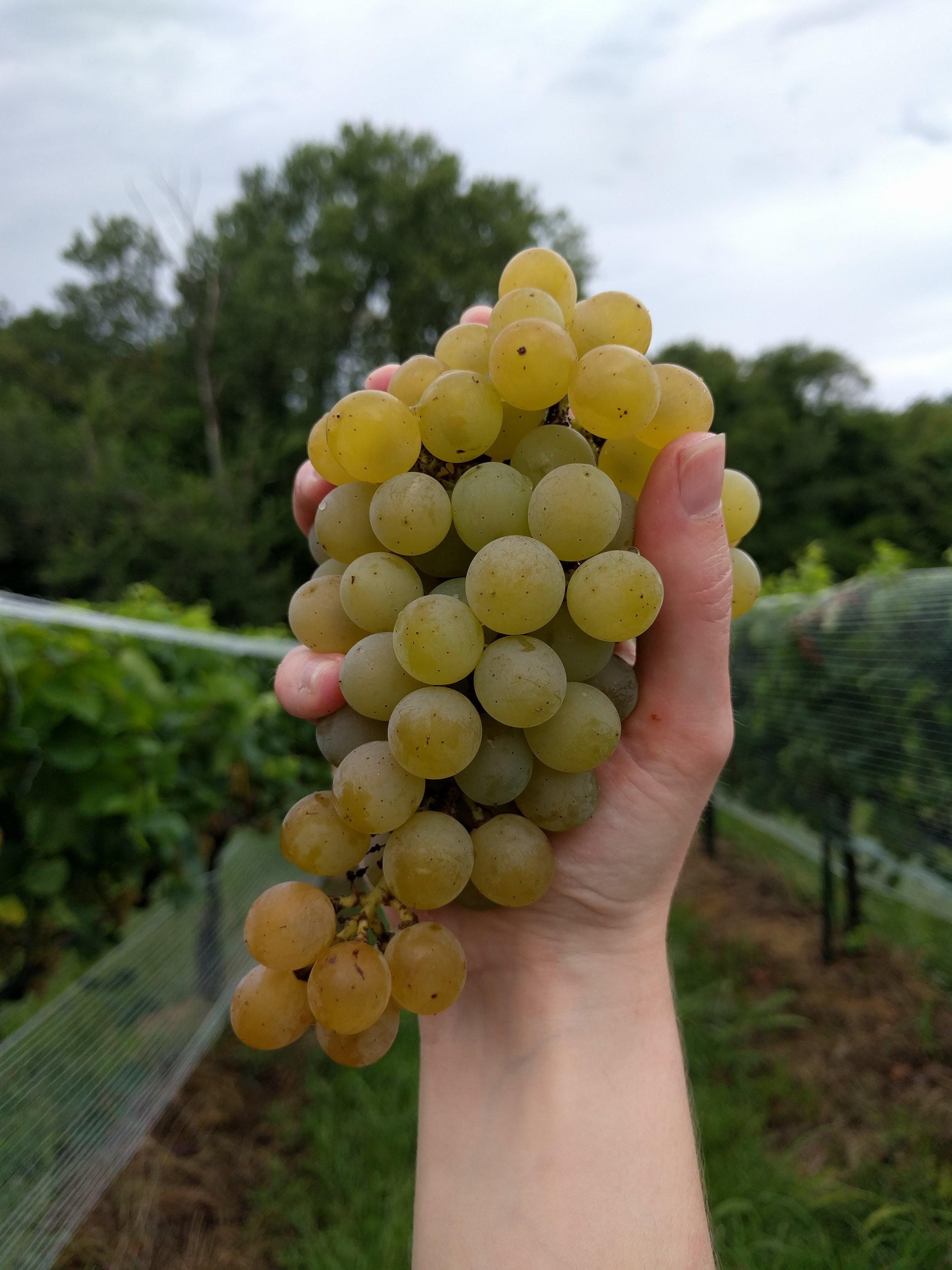 Explore our vineyard -