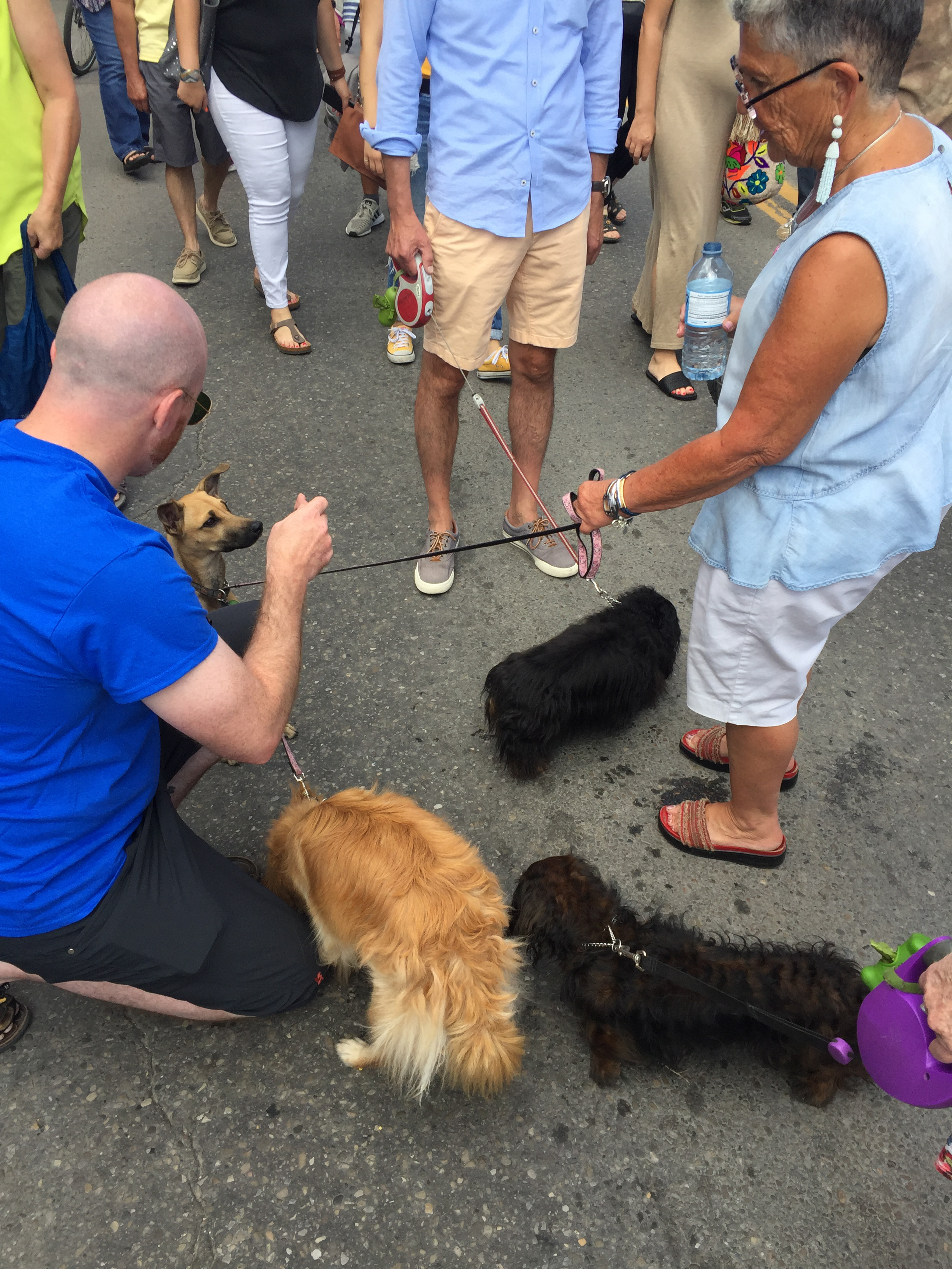 Inglewood Sunfest was the place to be if you like dogs. Our tent had a lot of canine visitors.