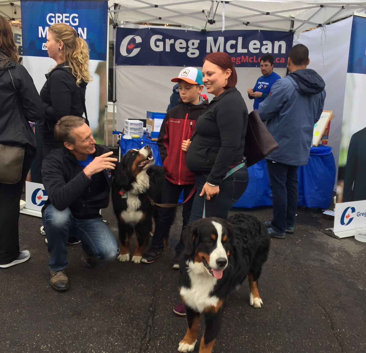 Courting the Bernese Mountain Dog vote. Aren't they beautiful animals!