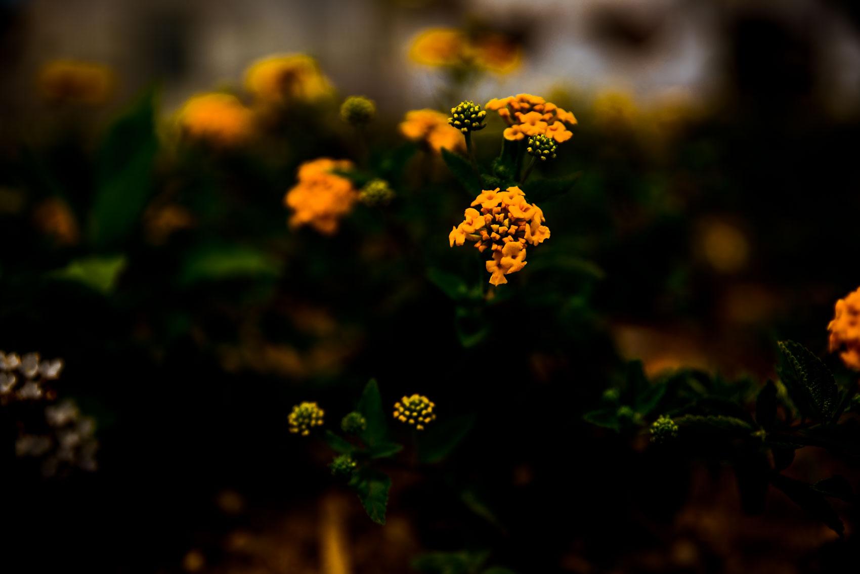 www.prfotostudio.com-S.A-5.JPG