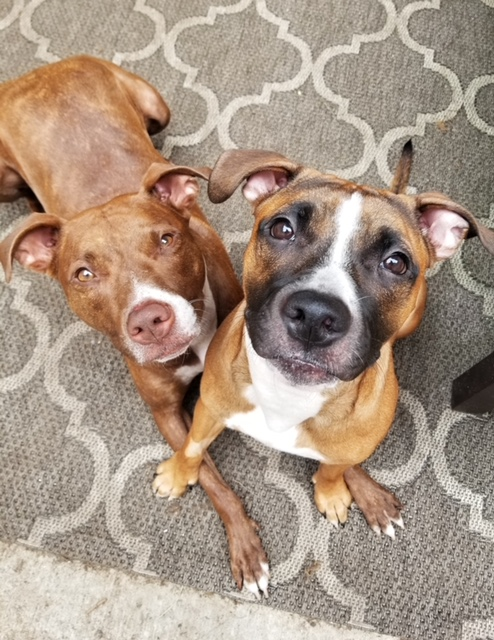 Penny and former foster Willow photo by @prodigypuppy