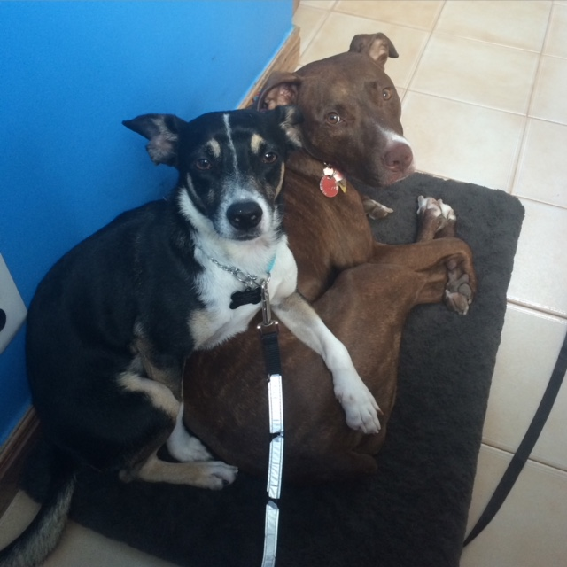 former foster Pepe and Penny