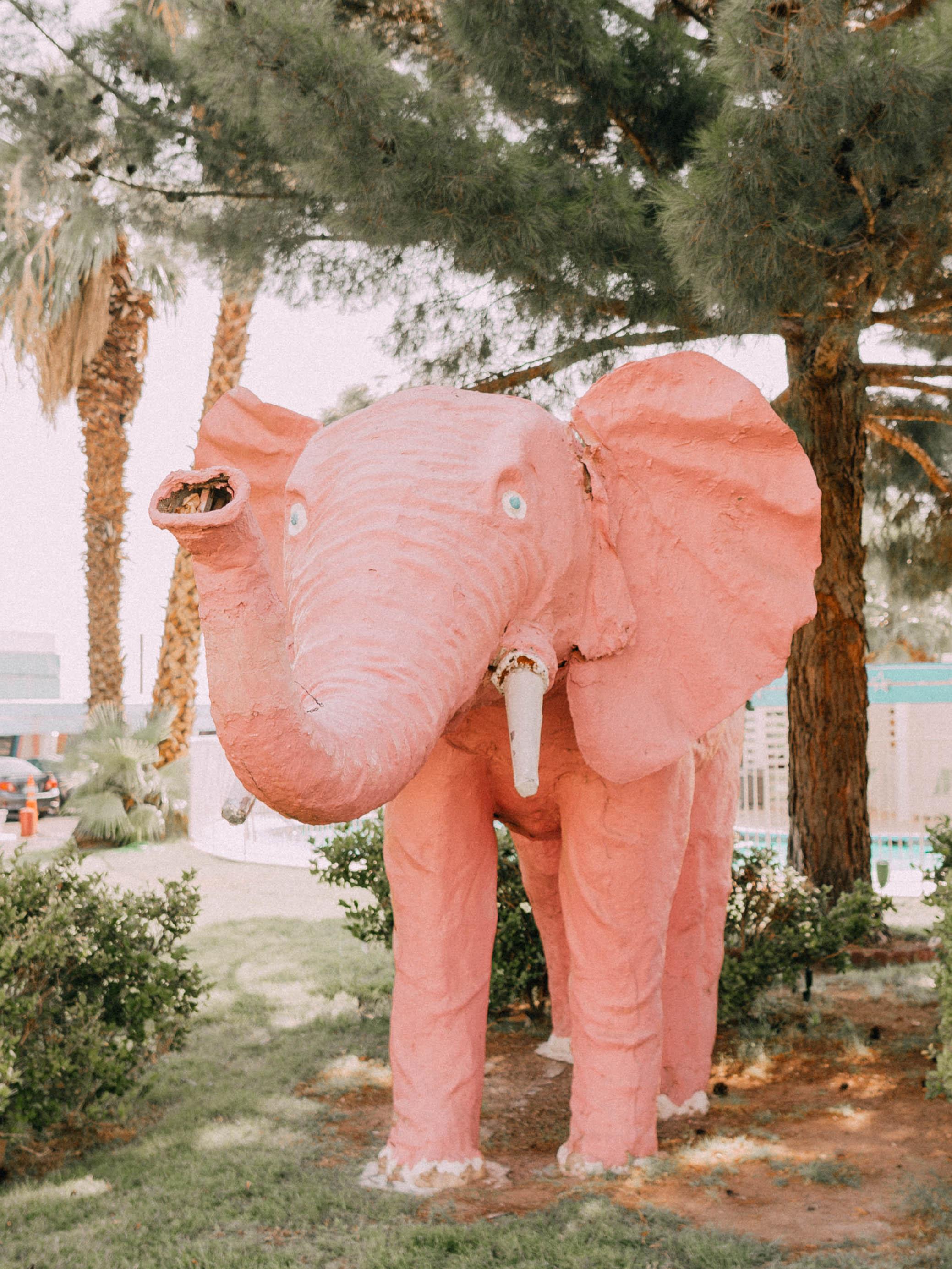 desert-dwelling-elephant-motel-3.jpg
