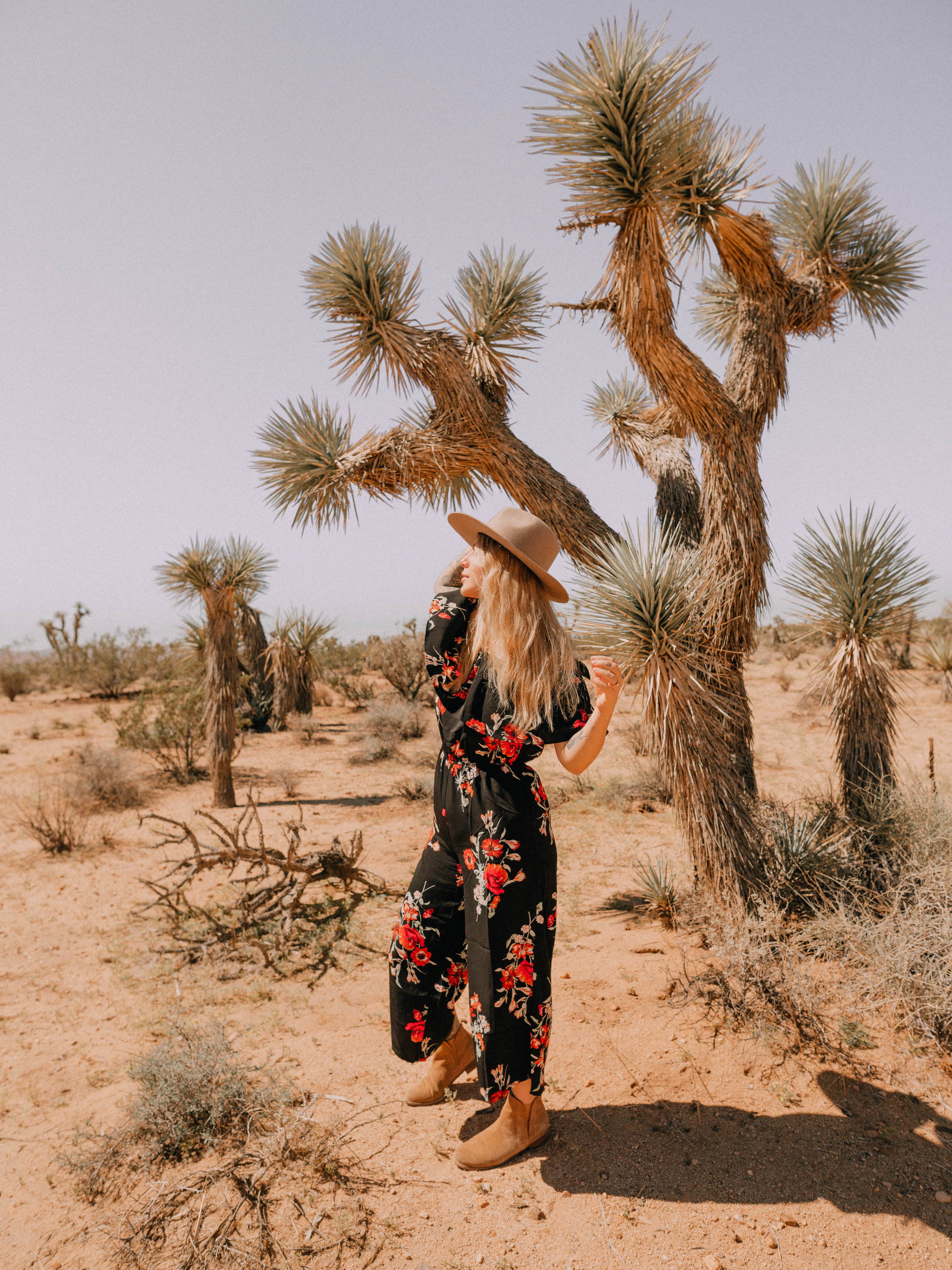 desert-dwelling-joshua-tree-15.jpg