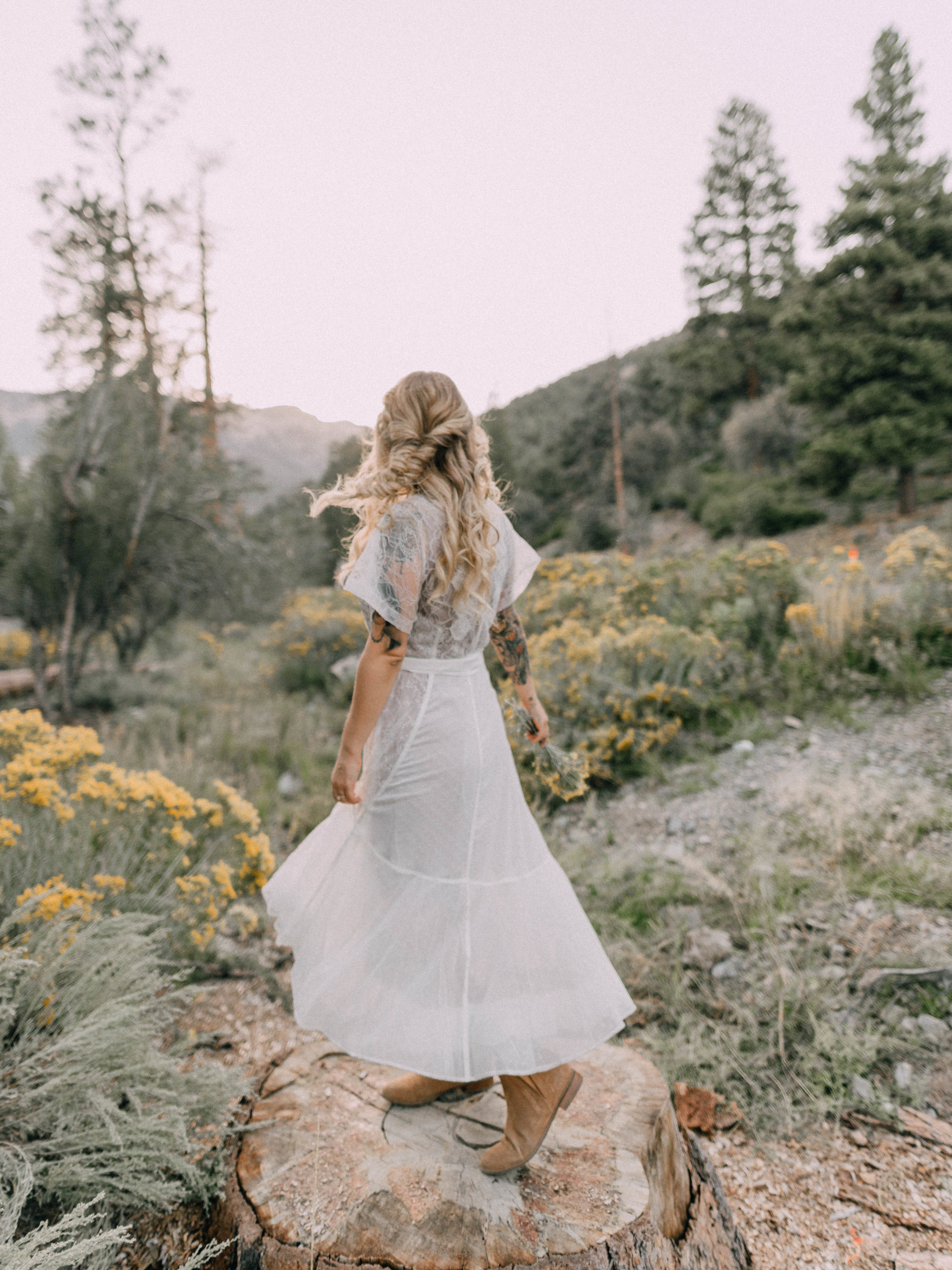 desertdwelling-wildflower-6