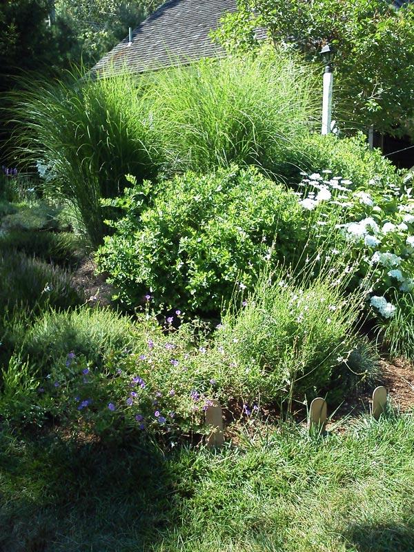 Perennials,-Flowering-Shrubs-_-Grasses---Orleans,-MA.jpg