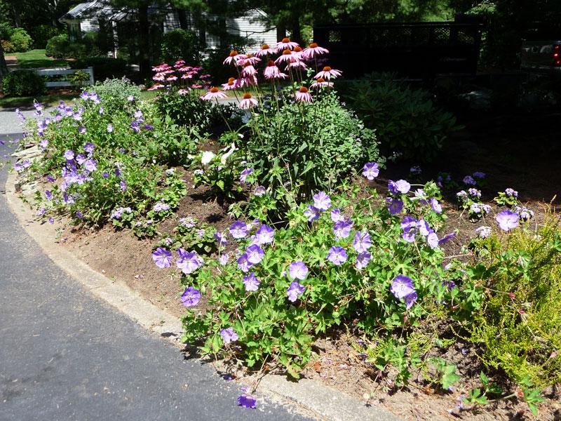 Driveway-Border-Garden_Osterville,-MA.jpg