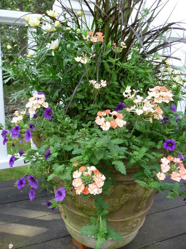 Planters-Floral-Arrangements-Cape-Cod4.jpg
