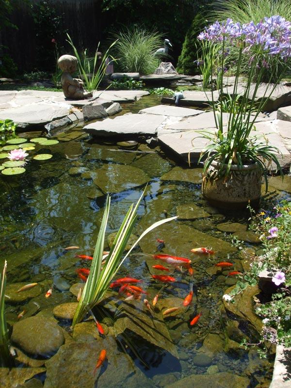 Koi-Fish-Pond---Harwich-Port,-MA.jpg