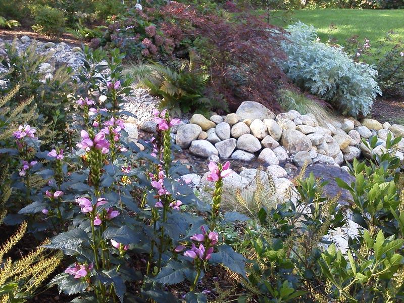 Planting-Detail-_-Stream---Dennis,-MA.jpg