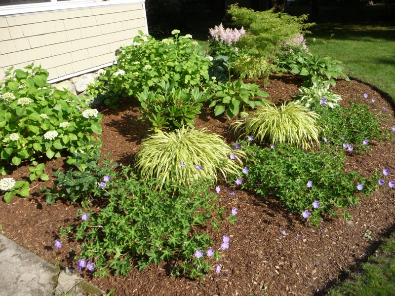 Centerville,-MA_Dewey-Landscaping-Foundation-Plantings.jpg