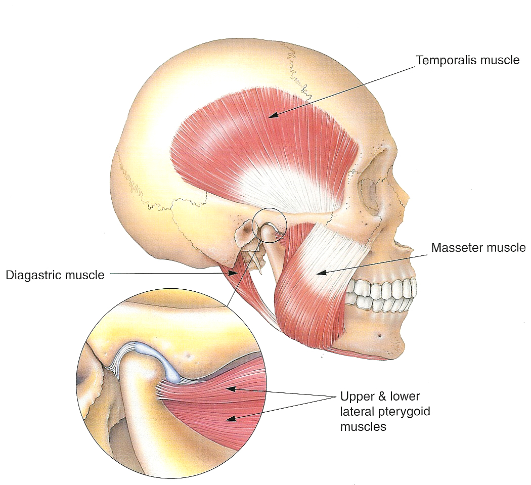 Tmj Dysfunction Lake Washington Physical Therapy