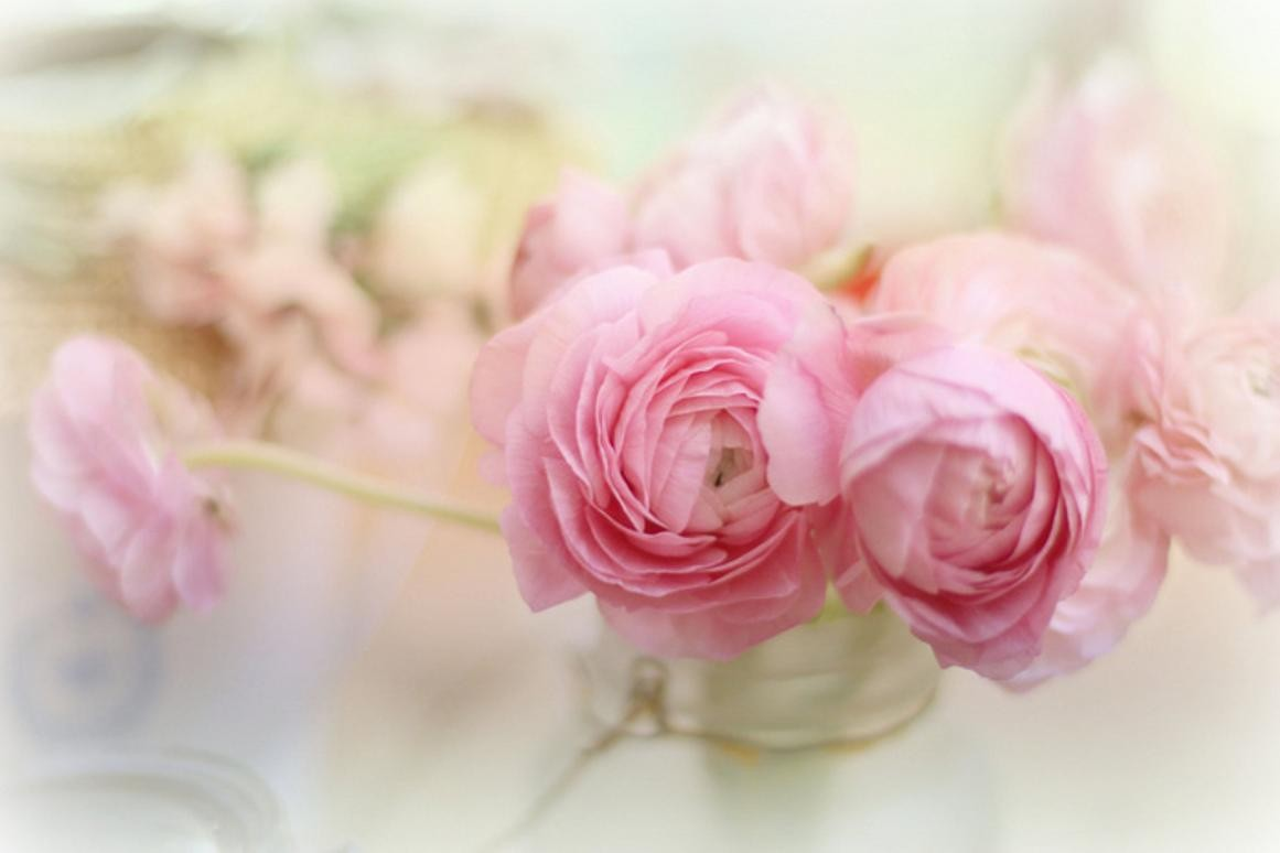 flowers-nature-soft-pink-flower-images-hd-quality.jpg