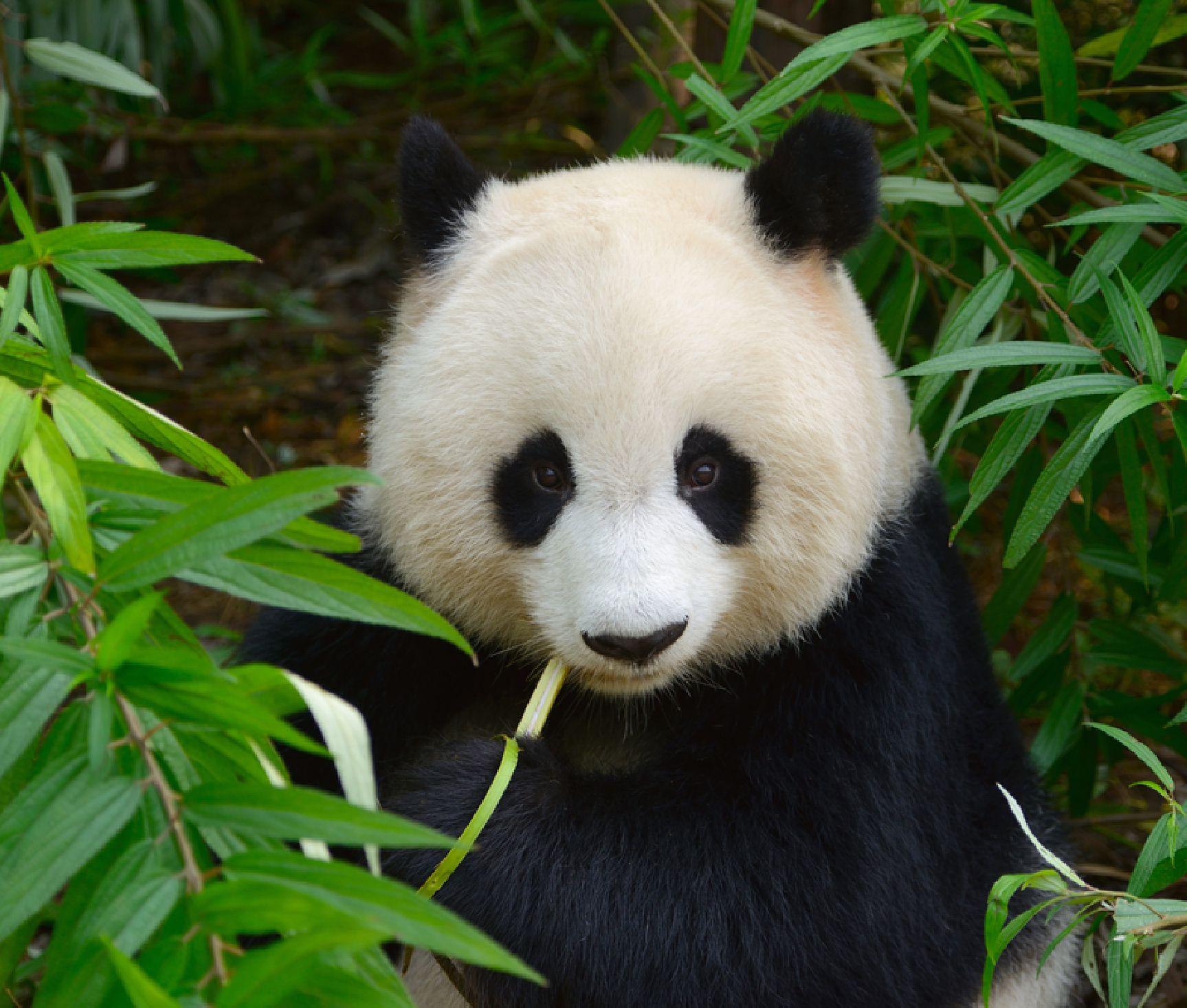 Bamboo 6.jpg