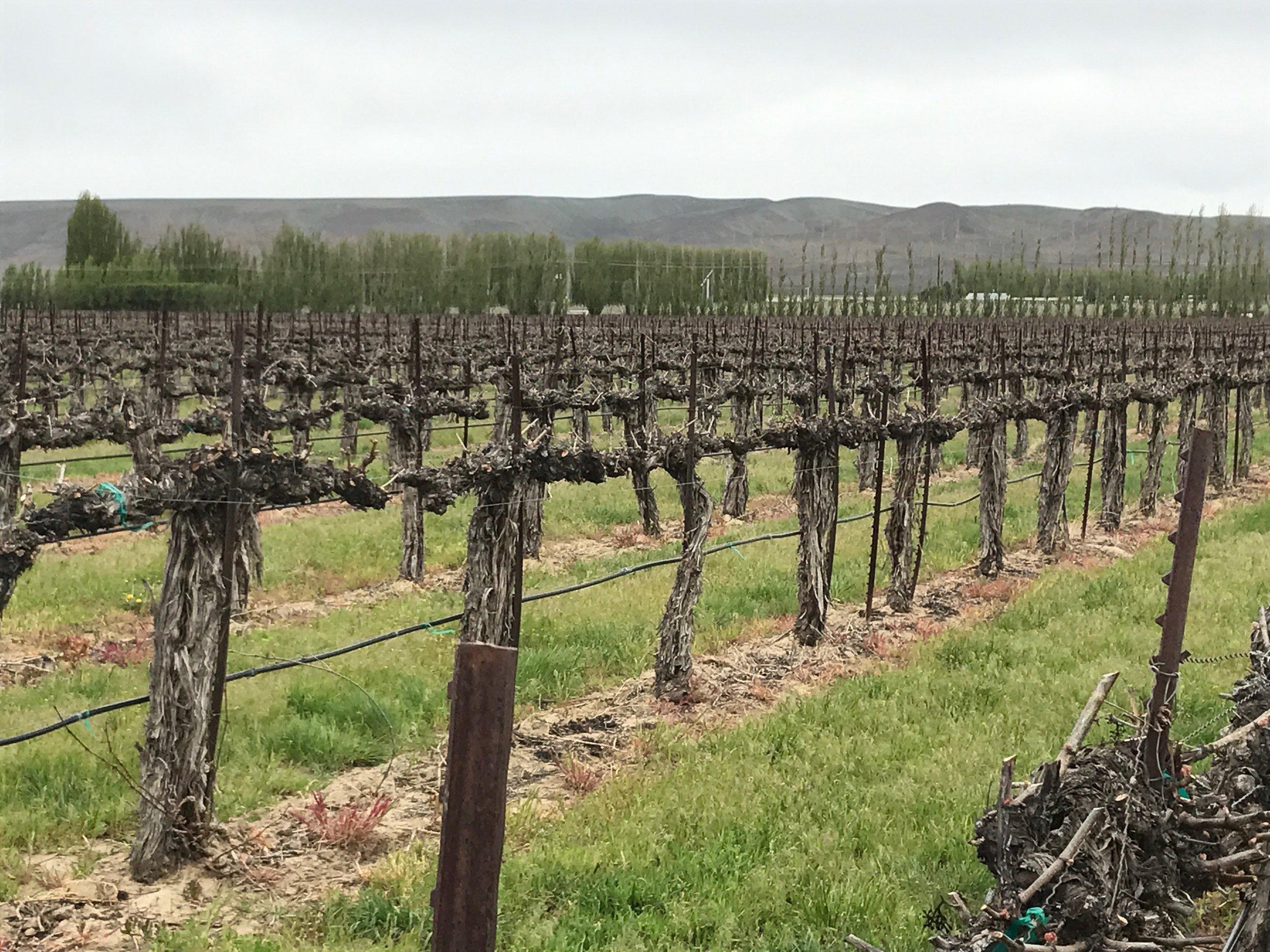 Weinbau Vineyard 5.jpg