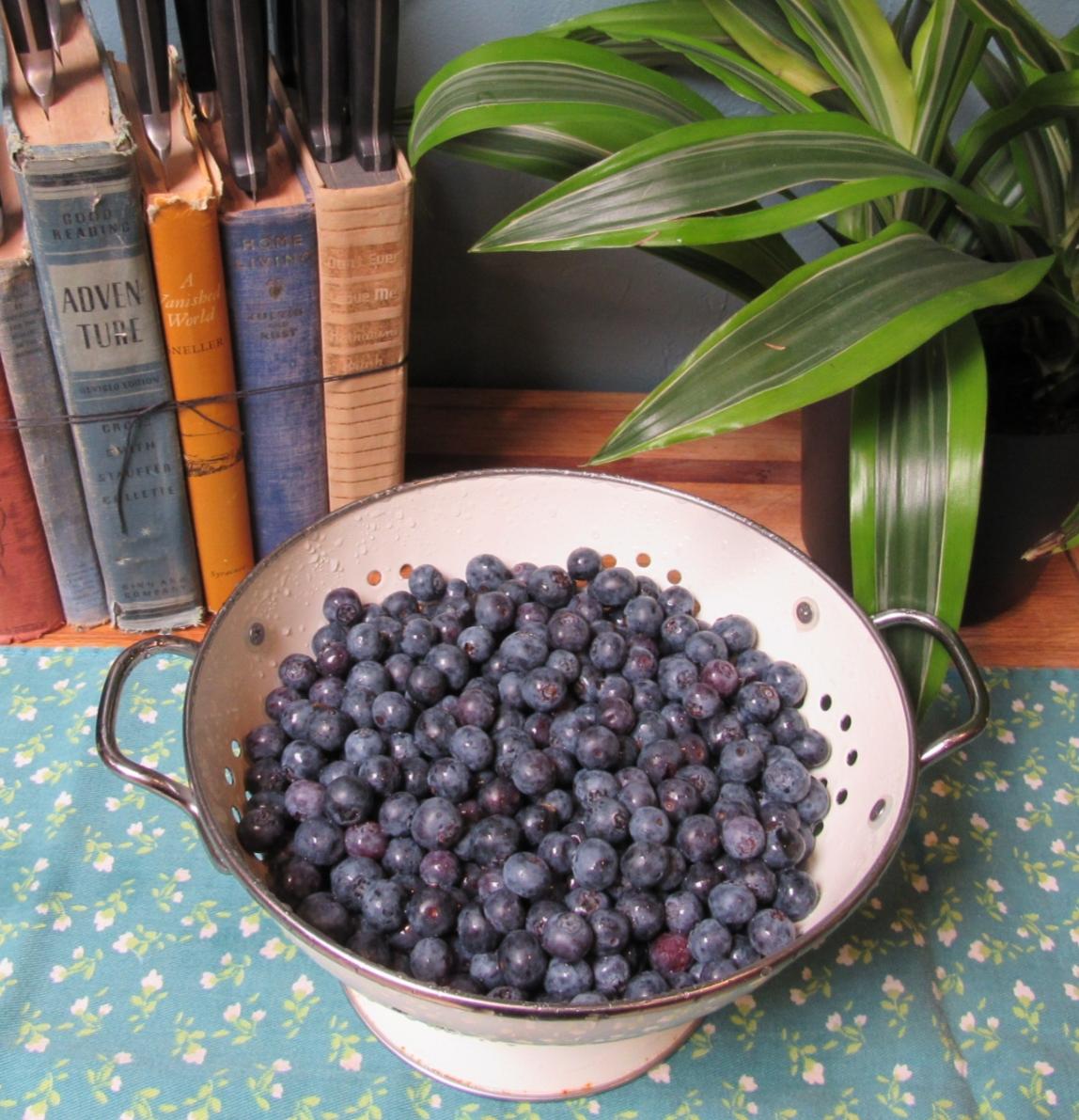 Mmmmmmmmmm……..fresh blueberries!