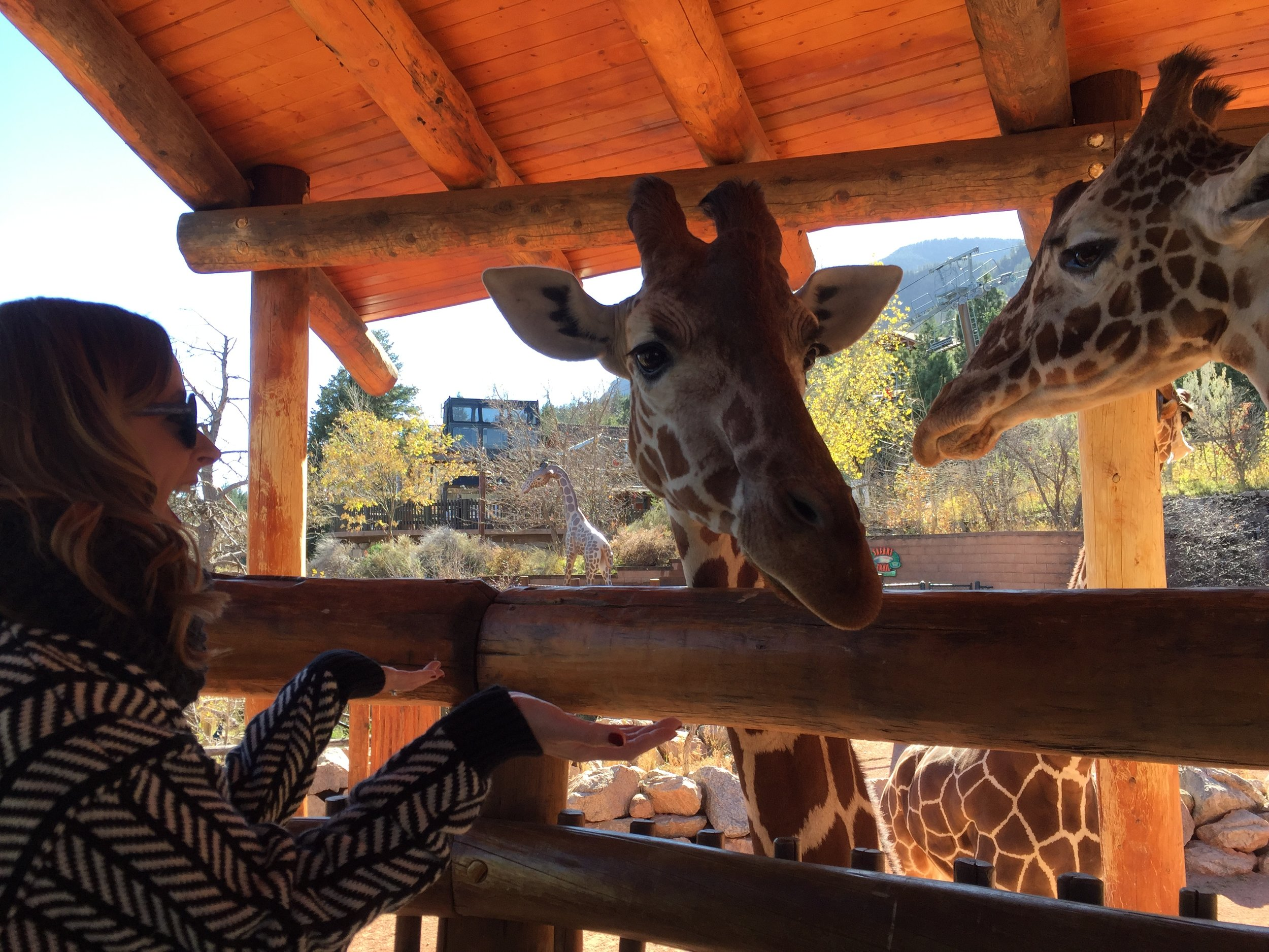 Jazzmin made my WILDEST zoo dreams come true with these two! - November 2016