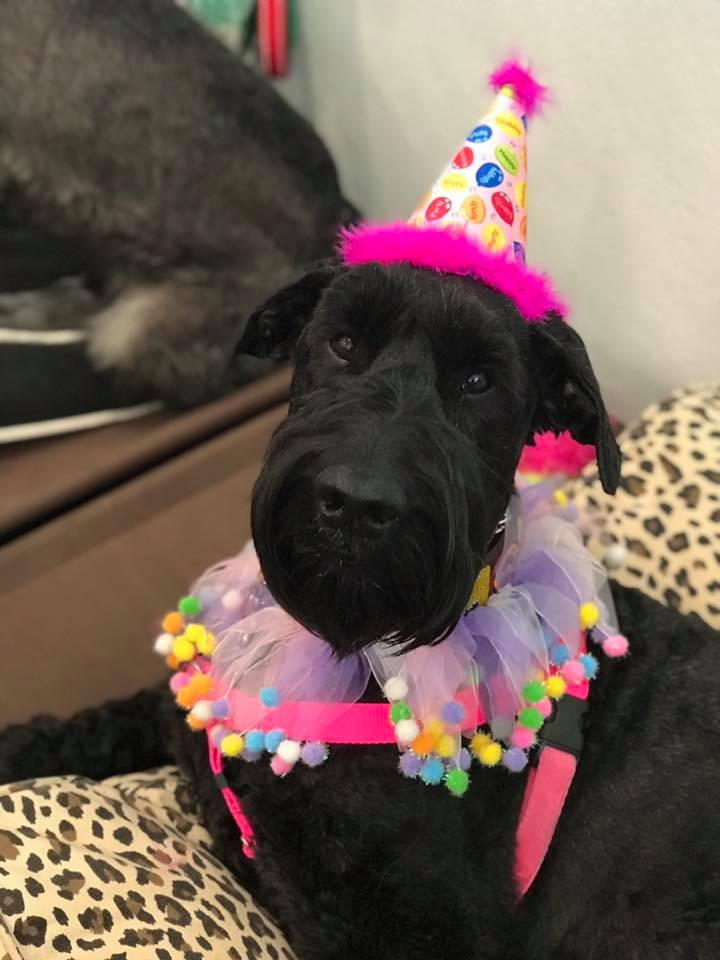 We had a huge celebration for her 6th birthday - April 21st.