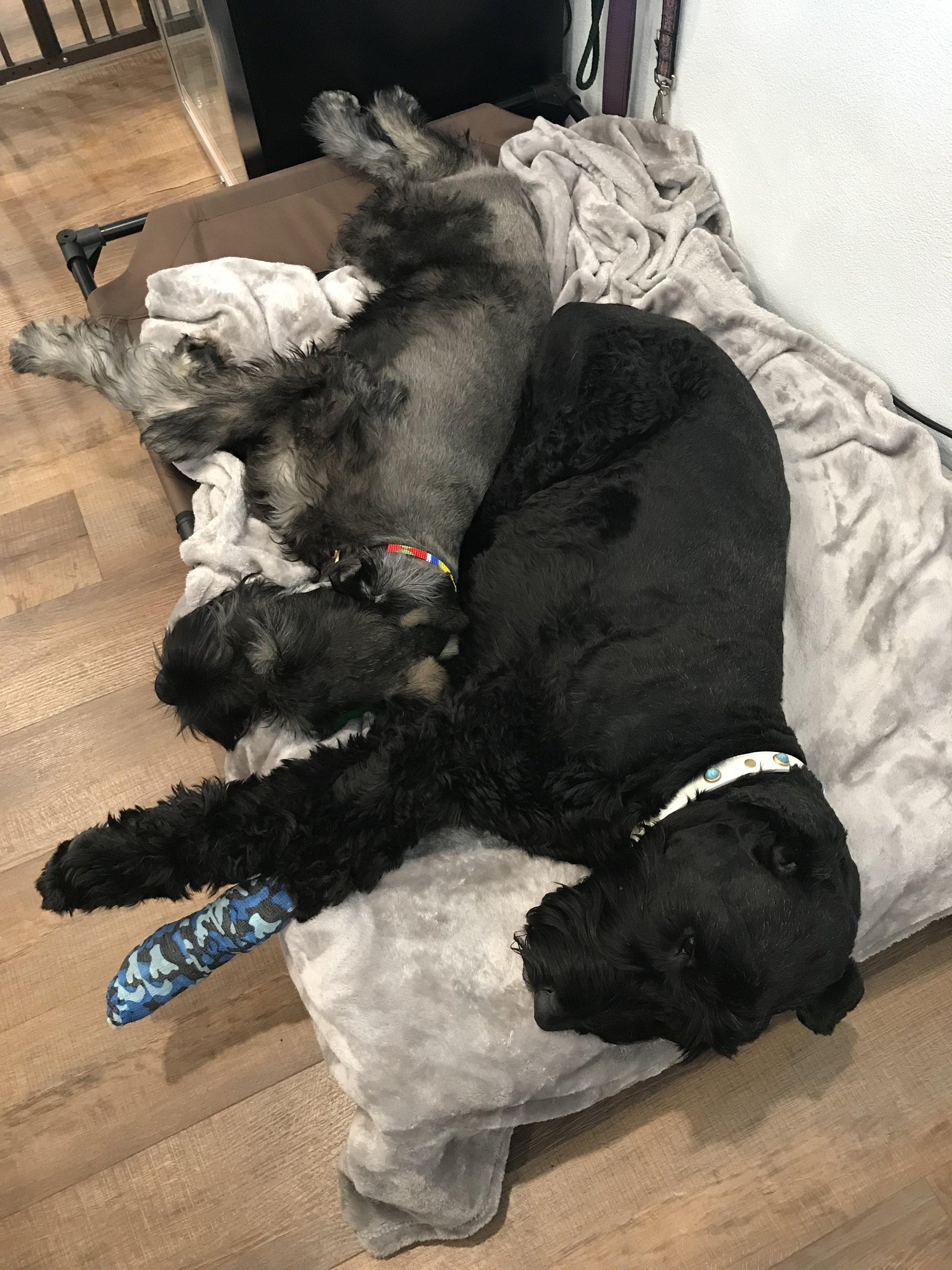 Sophie tolerated Archie's invasive snuggles