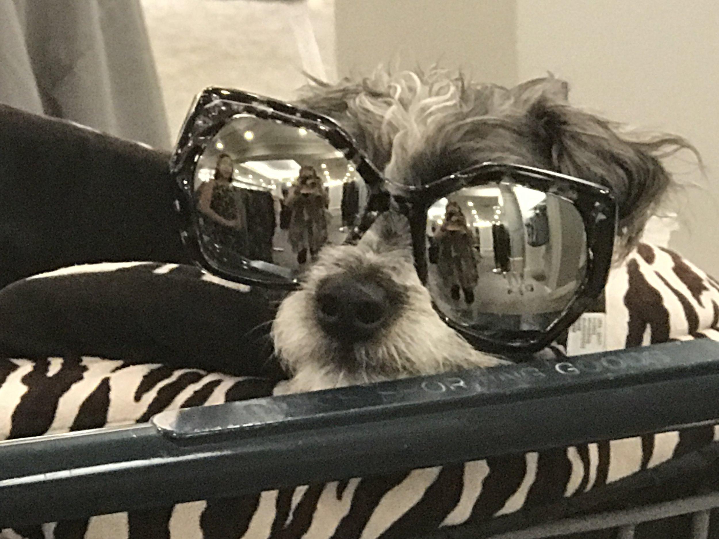 PERC-Pup.JPG