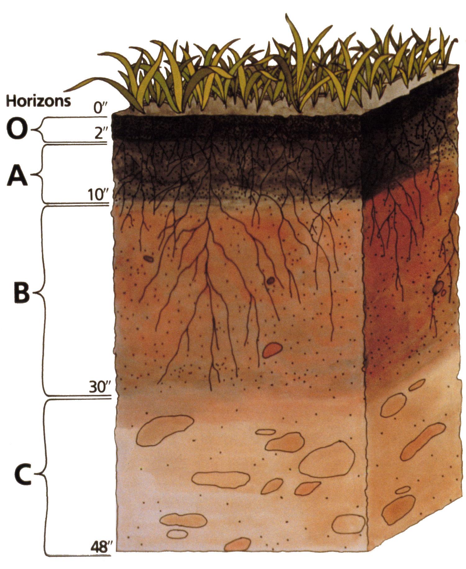 Soil_profile.png