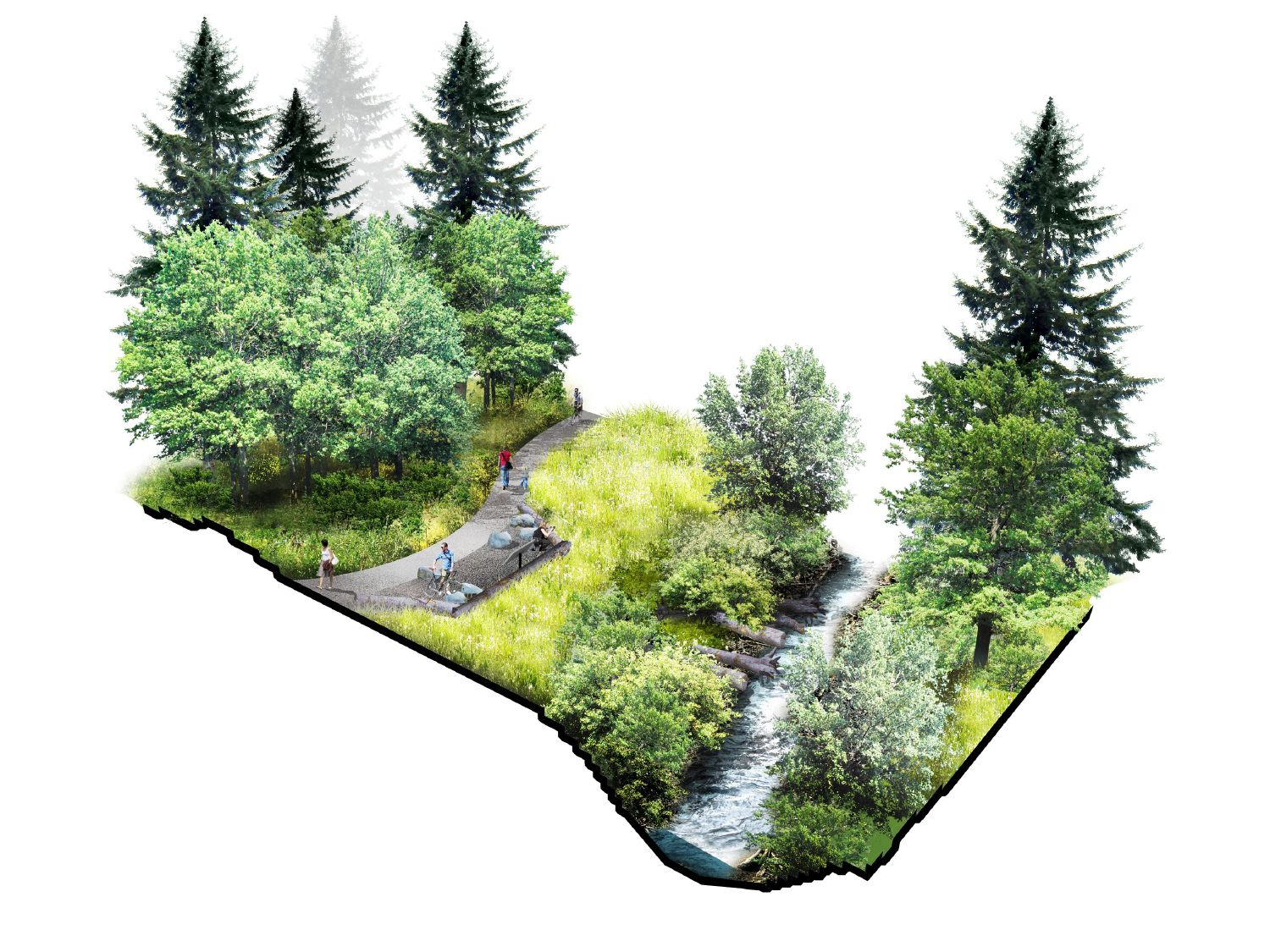 a cross-section graphic of Mt Scott Creek flowing through native plants and along a trail used by cyclists and people walking
