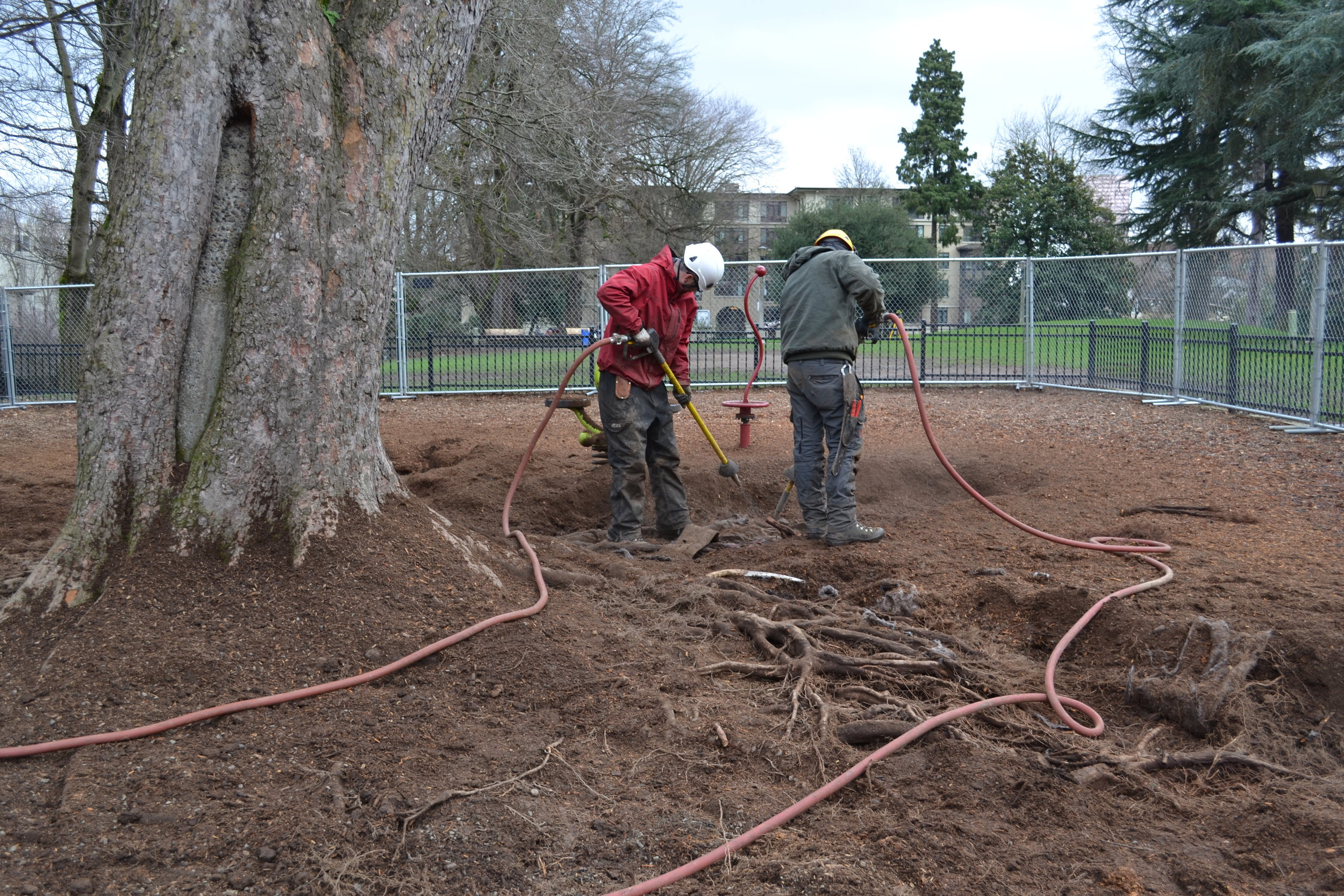 Couch Park Tree Root Survey With Compressed Air