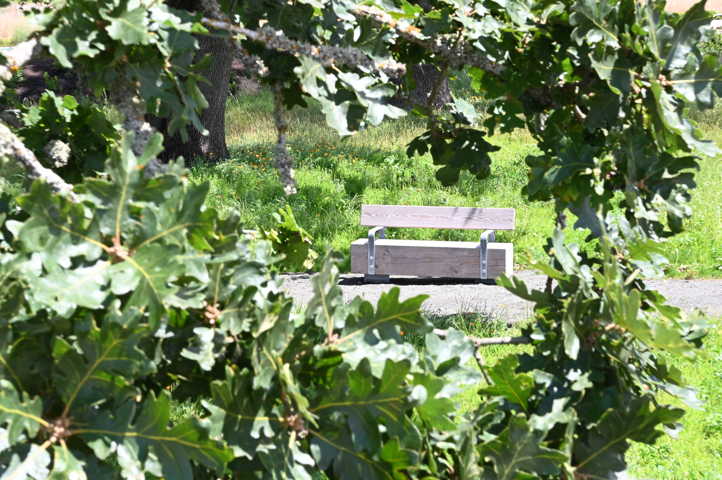 A wooden bench in a park framed by a gap in the leaves of oak tree branch