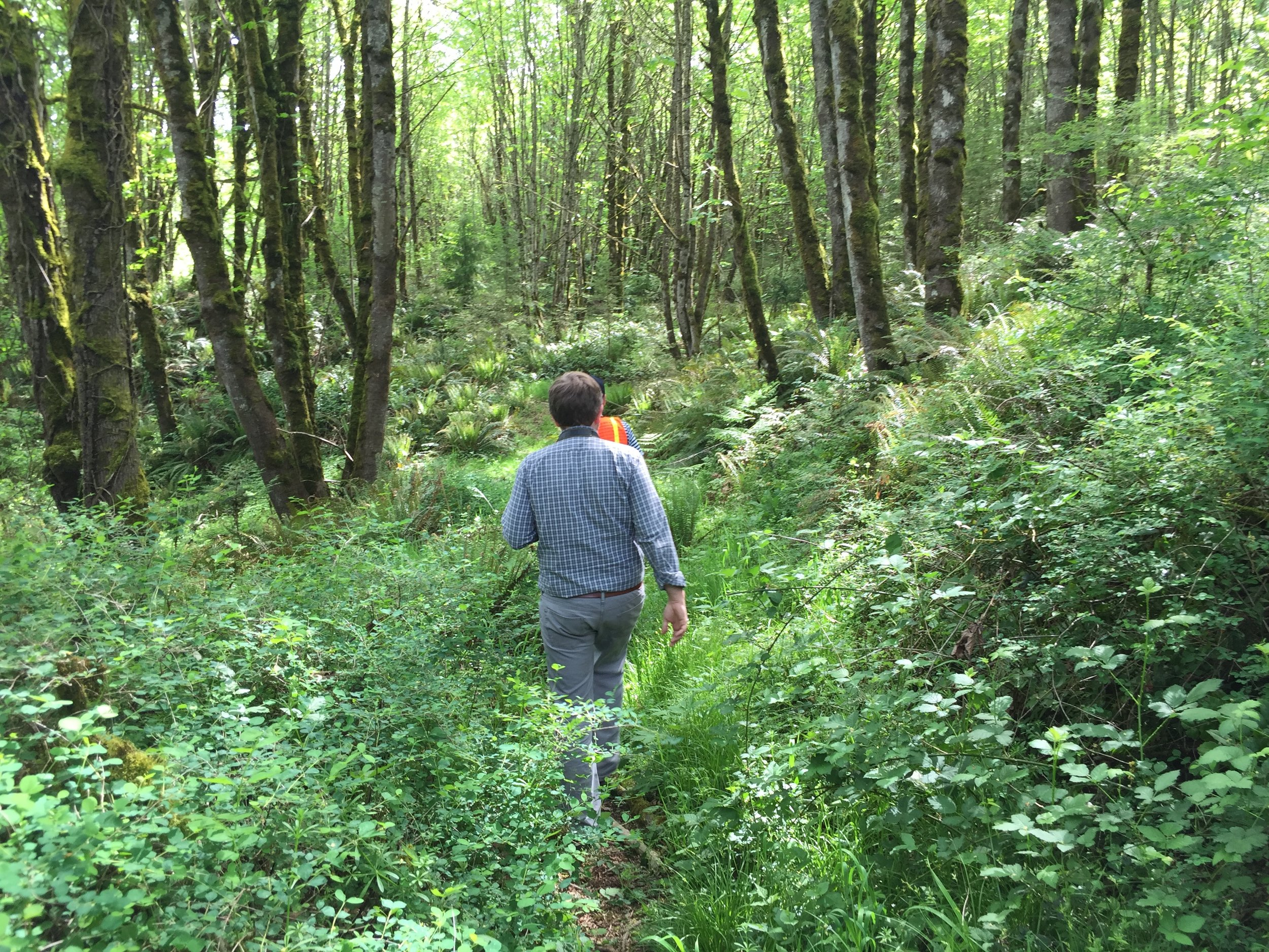 people using a trail in a shady forest at Newell creek canyon to access nature