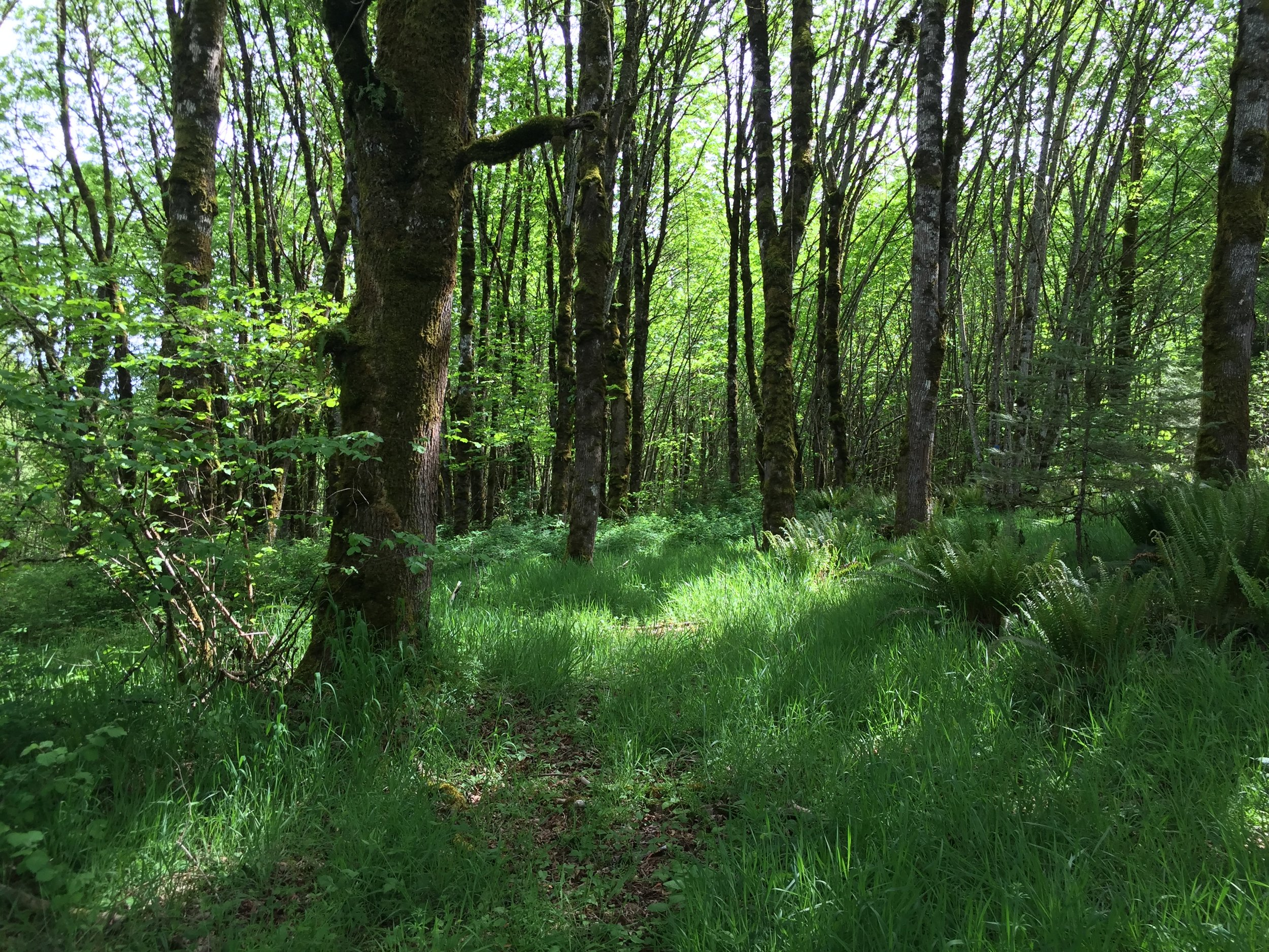 forest in summer, limited light filtering through into the short grass below