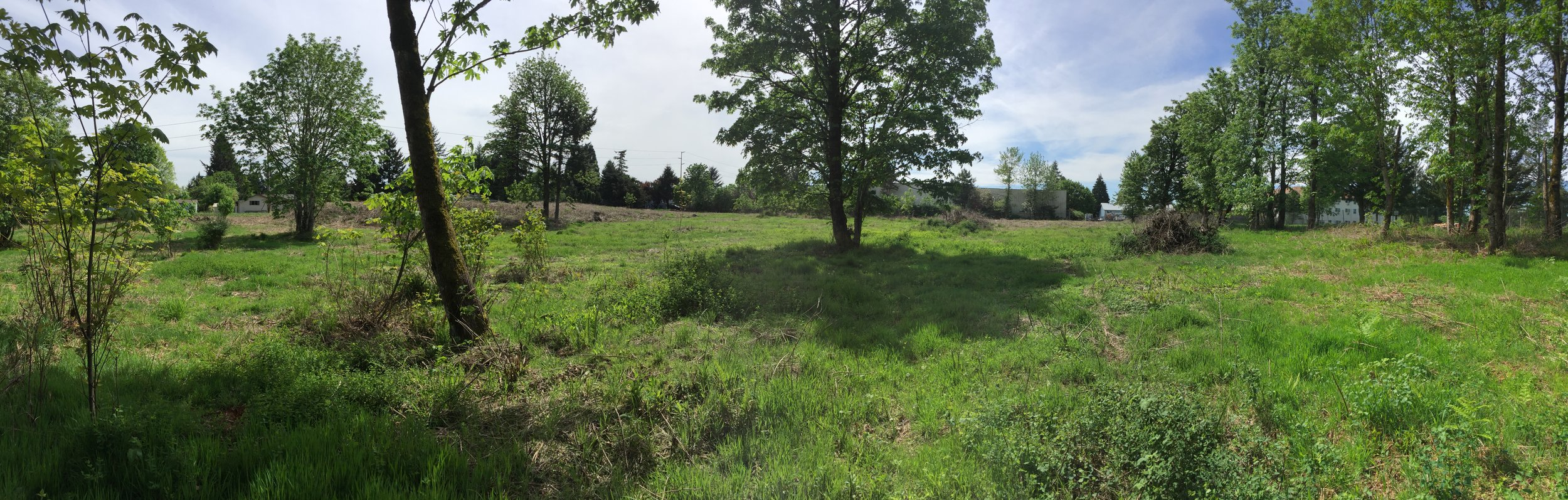 vacant land behind a shopping center, a meadow with a variety of tree species and grasses on a sunny day