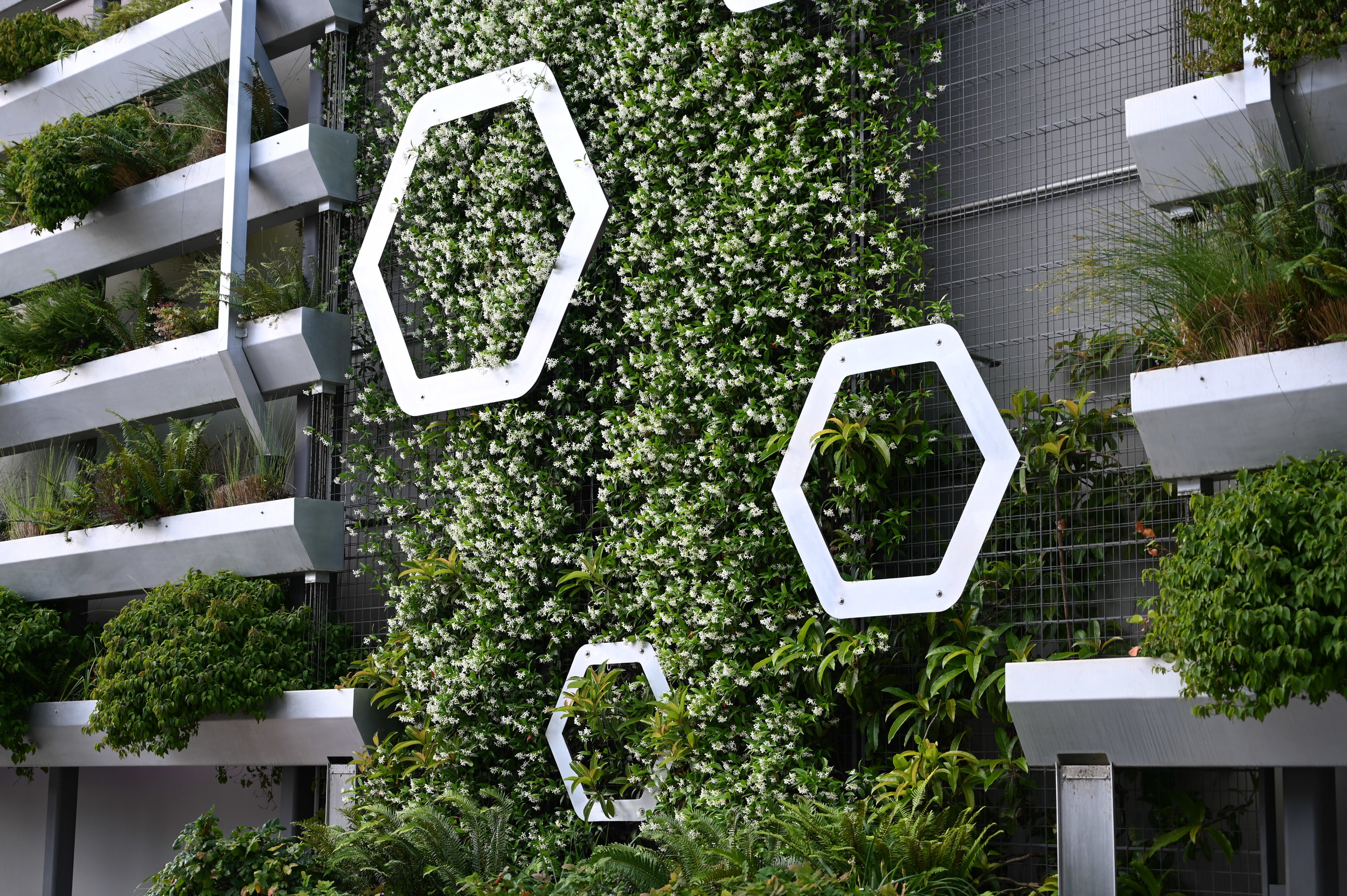 Metal hexagons on stormwater wall surrounded by blooming star jasmine