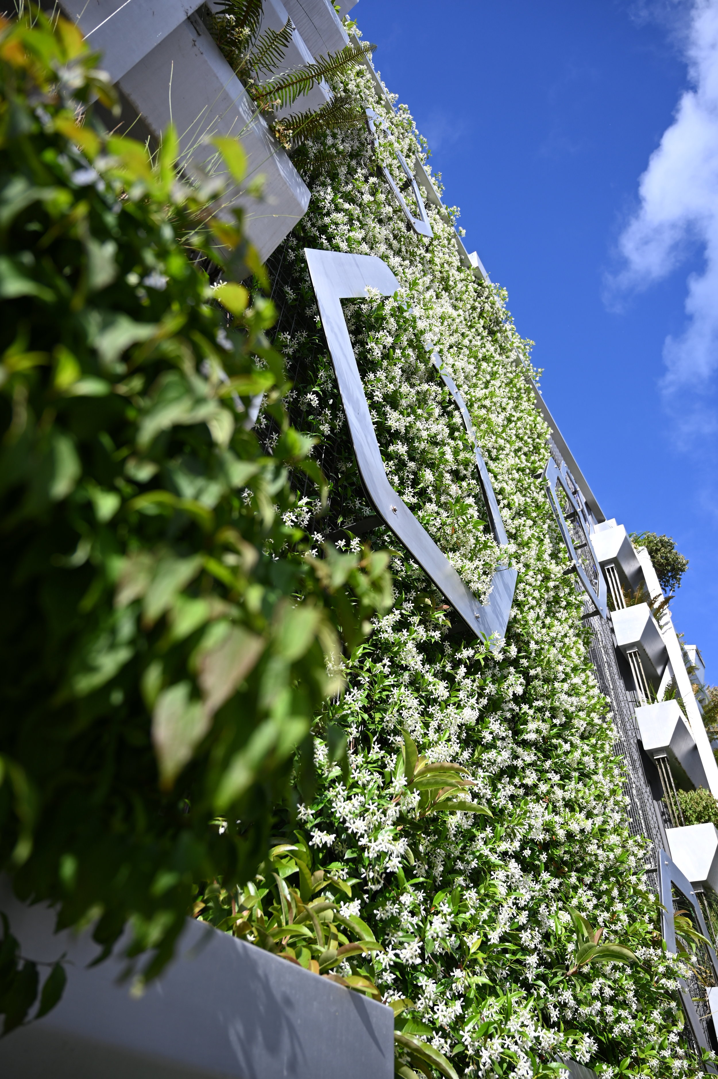 green wall from the ground, clear sky and sun above