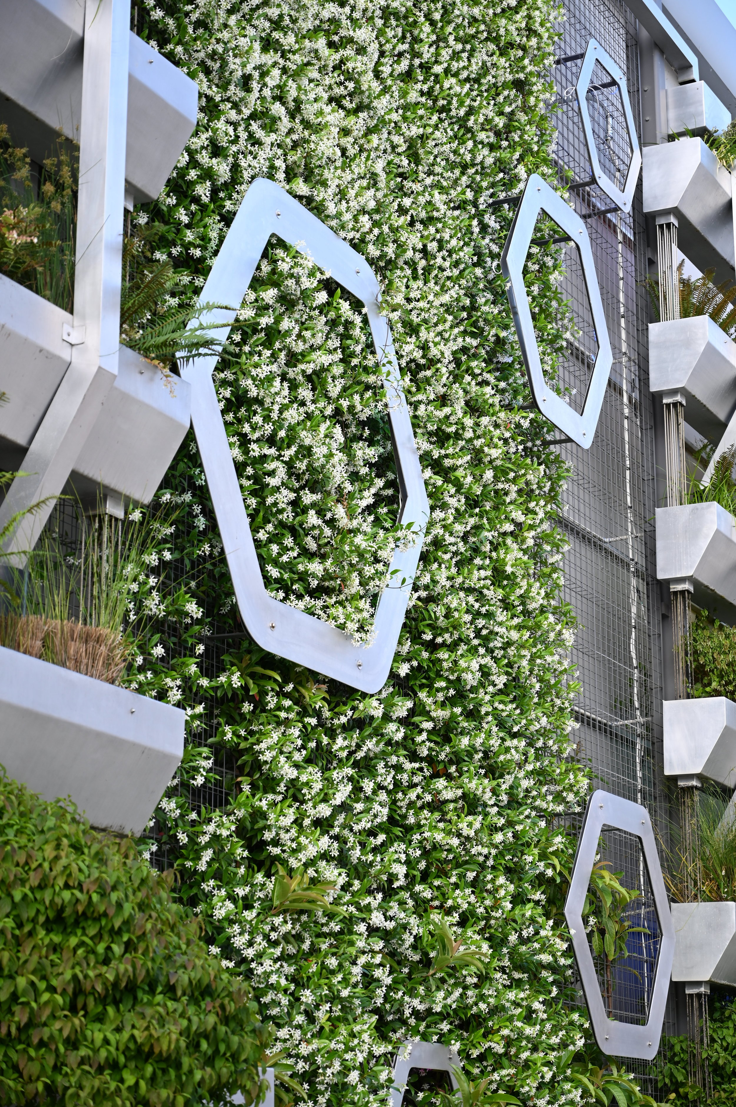 Four hexagons on green wall among star jasmine growing from wire mesh background