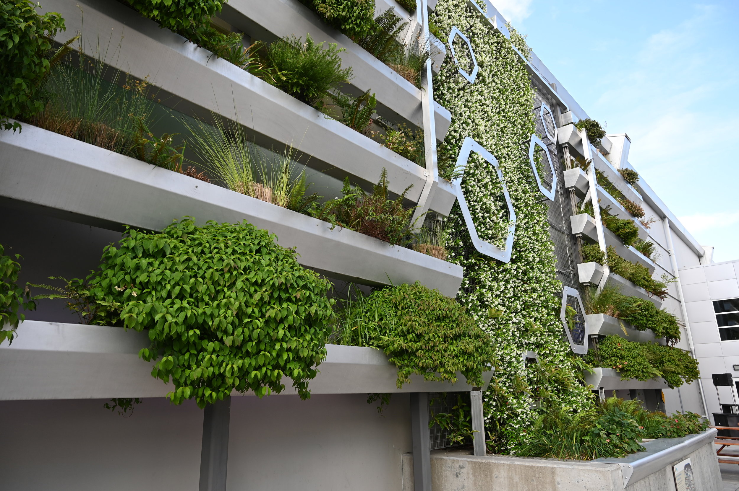 Green Wall from close up showing expanse with hexagons and mature sedges and grasses