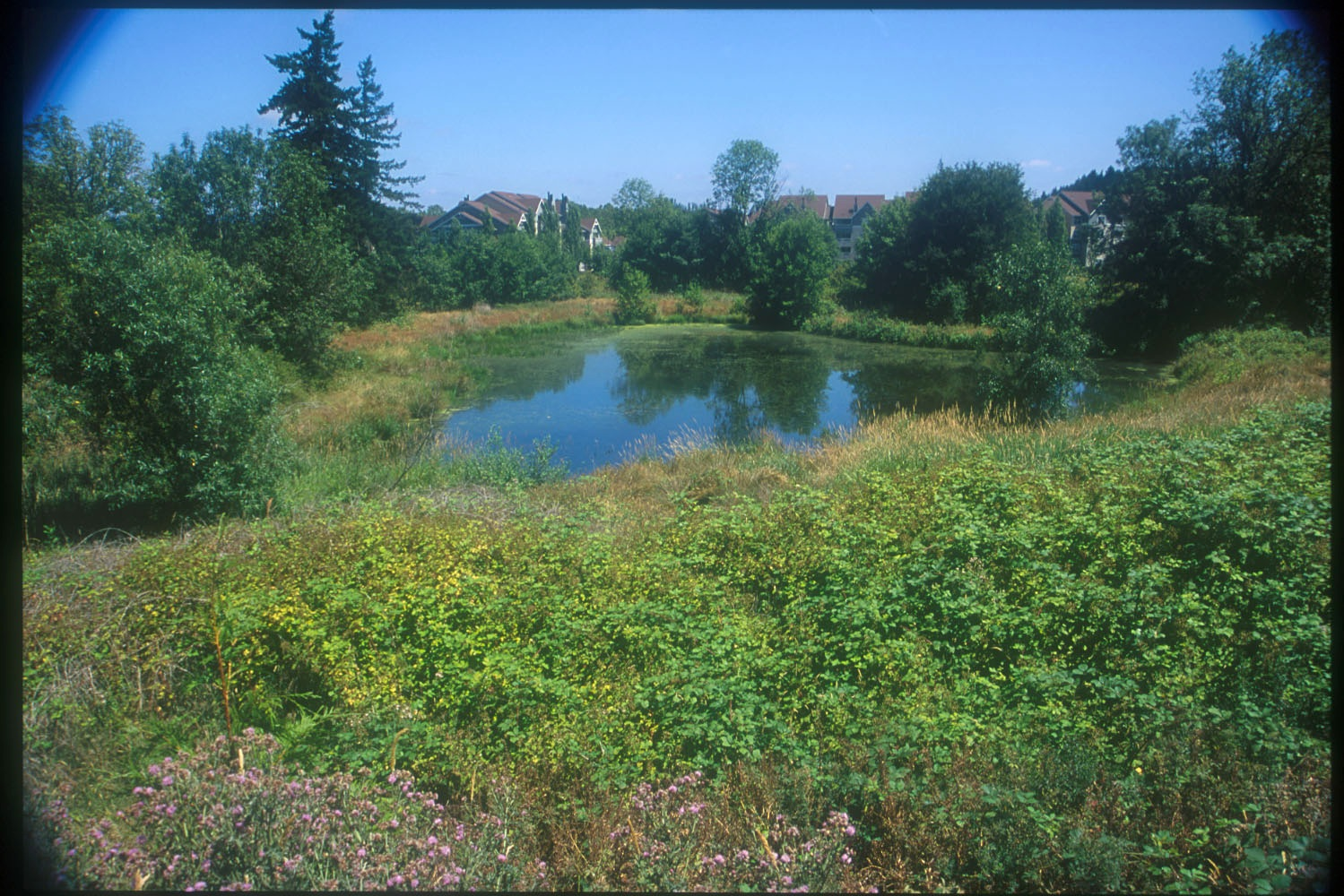 pond at rock creek greenway on sunny day