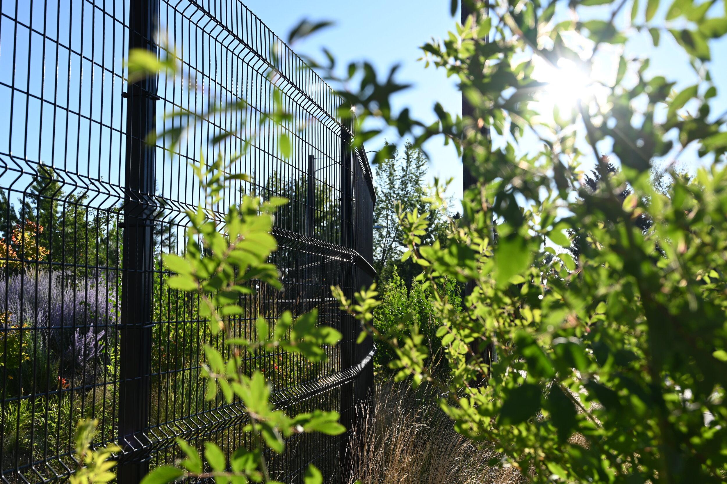 metal_grid_fence_plants.JPG