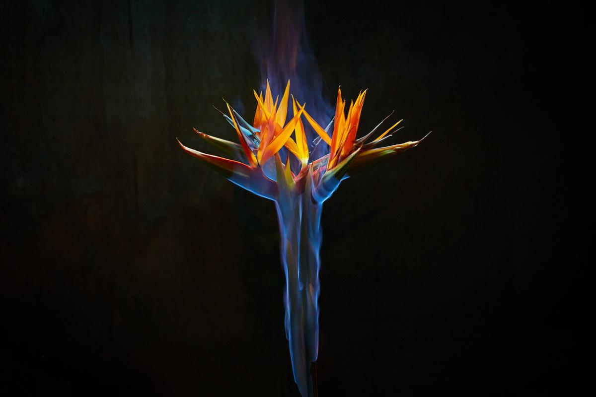 180802---Burn---191.jpg