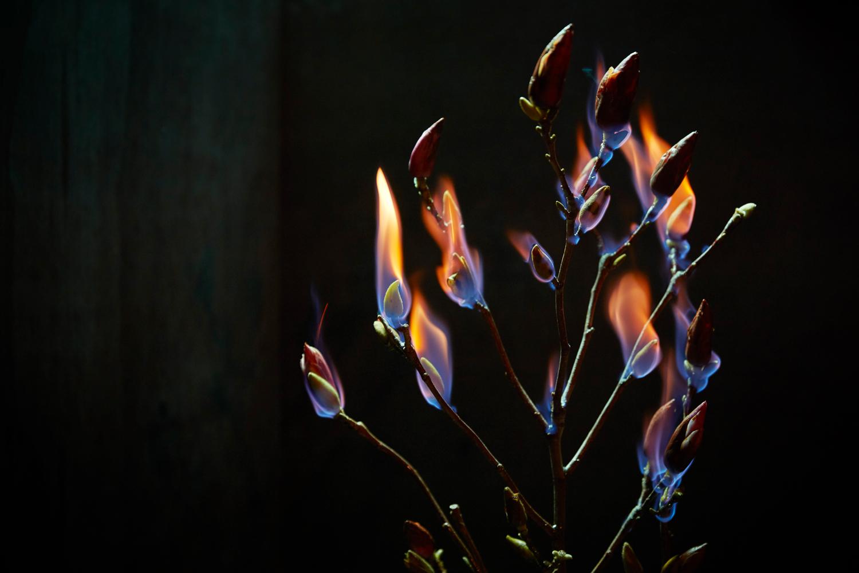 180802---Burn---248.jpg