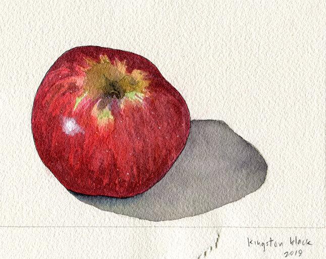 Kingston Black apple