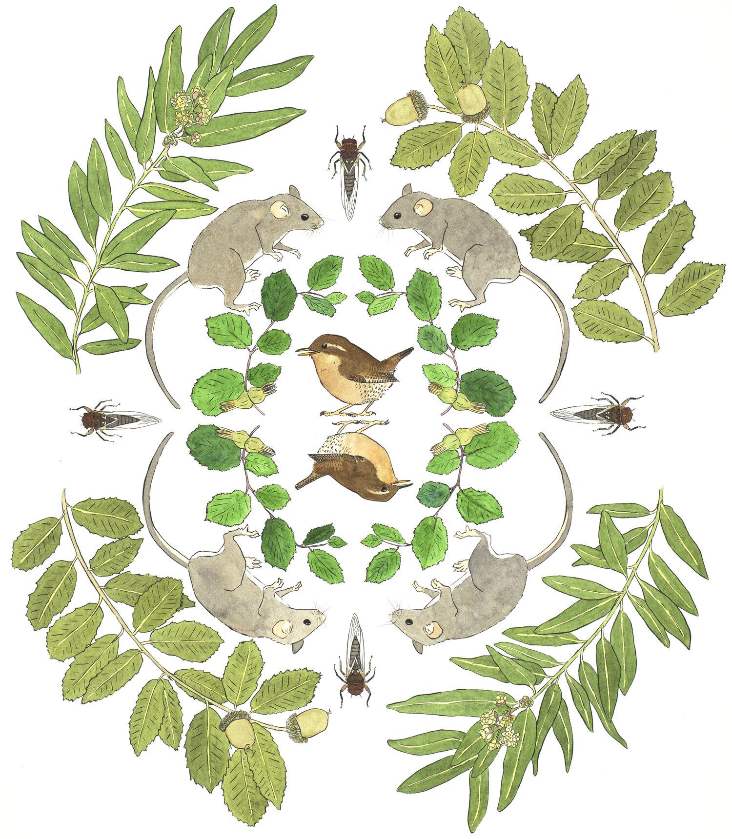 Wrens in the Hazelnuts
