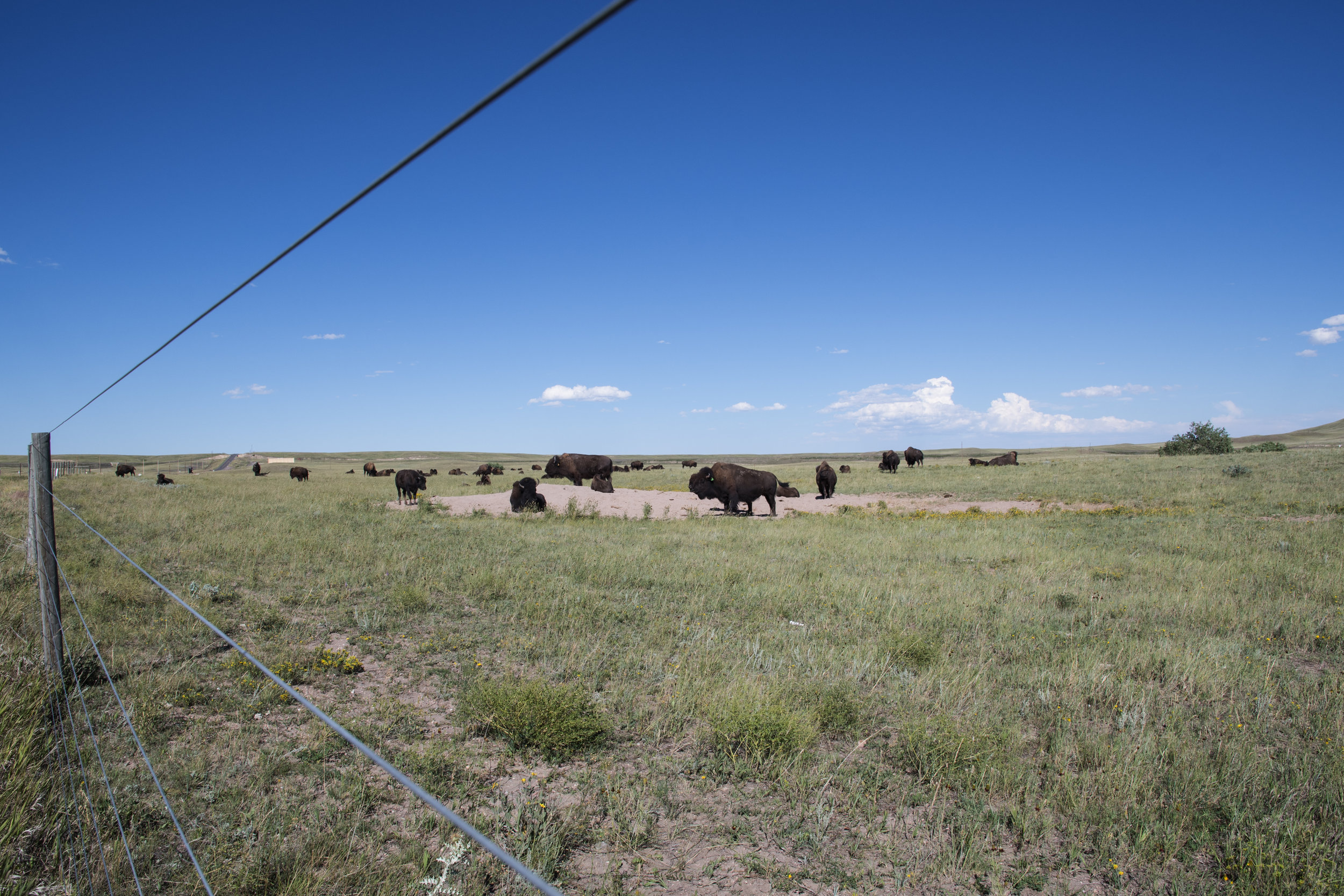 Terry-Bison-Ranch_4.jpg