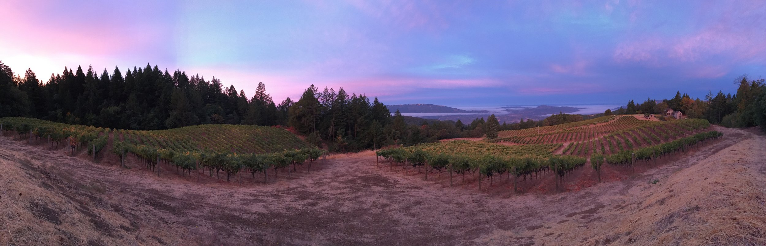 MoonRidge Vineyard Sunrise