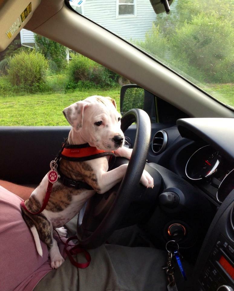 Lulu drives.jpeg