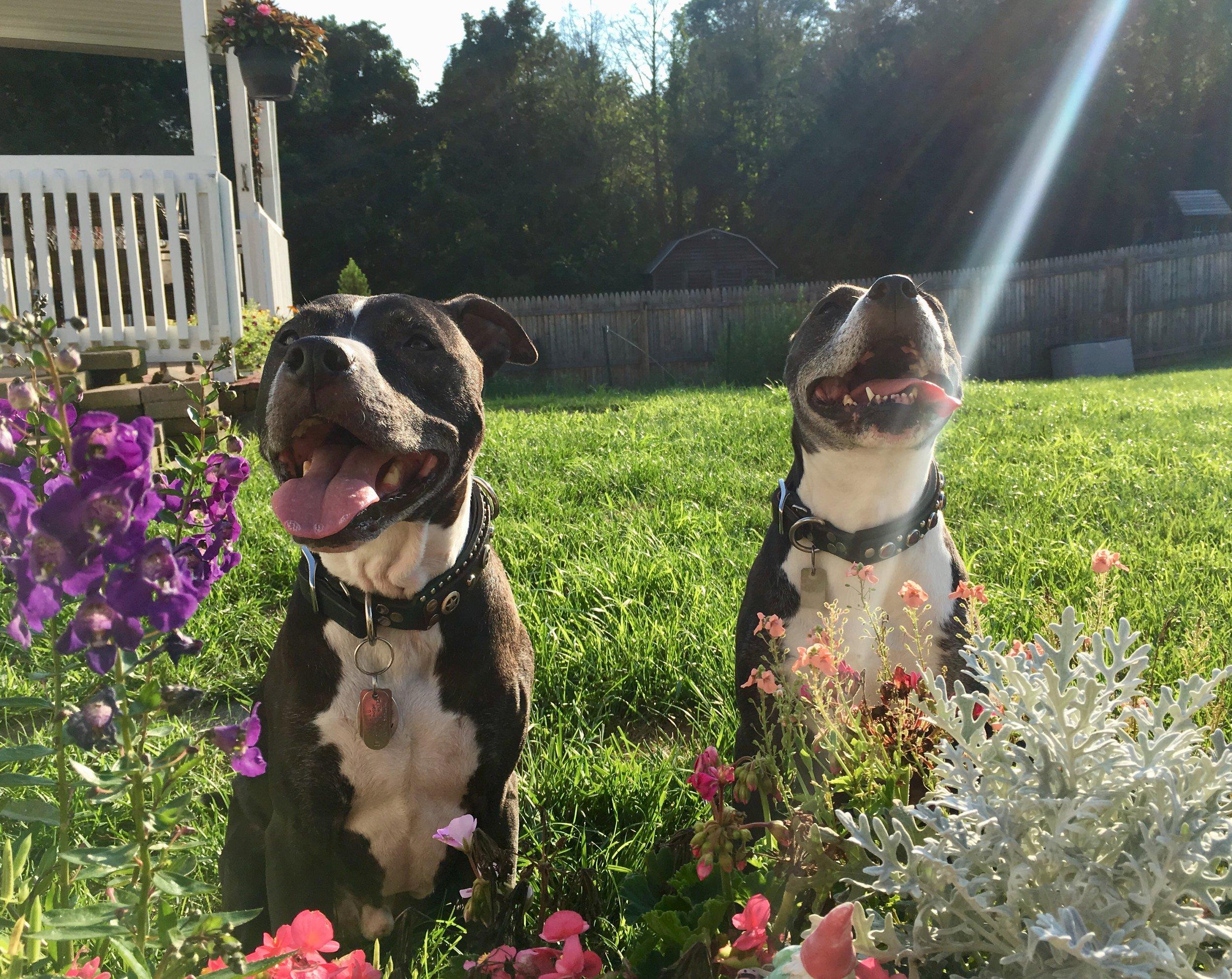 Harley Wagalot and Orbit enjoying some rays.