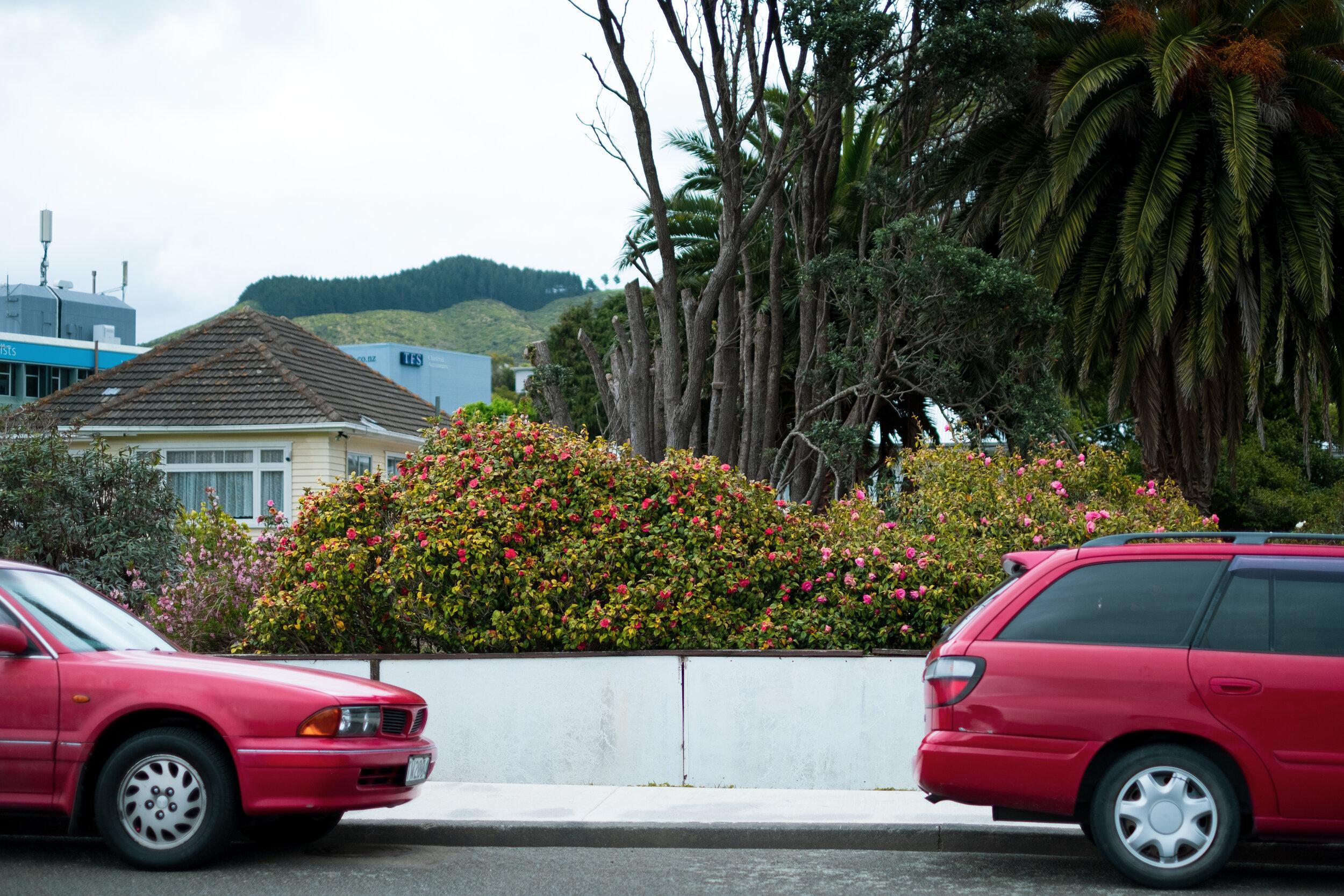tawa garden and cars.jpg
