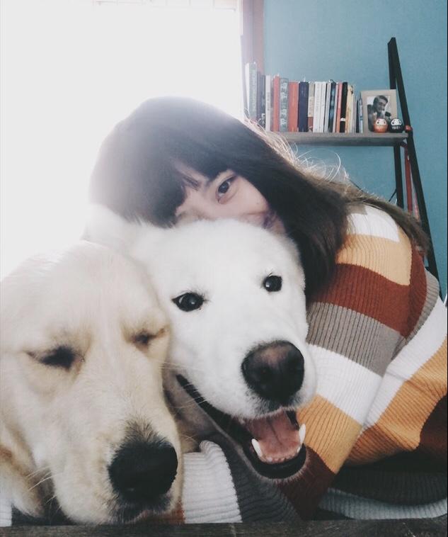 Ich sorge dafür, dass alle Hunde nach dem Frühstück einen fairen Anteil an cuddles bekommen. Dazu gehören meine Huskies, Melon und Eira. Ich Küsse auch meine Maltese, Saphira's Urne, die kürzlich verstorben ist. -